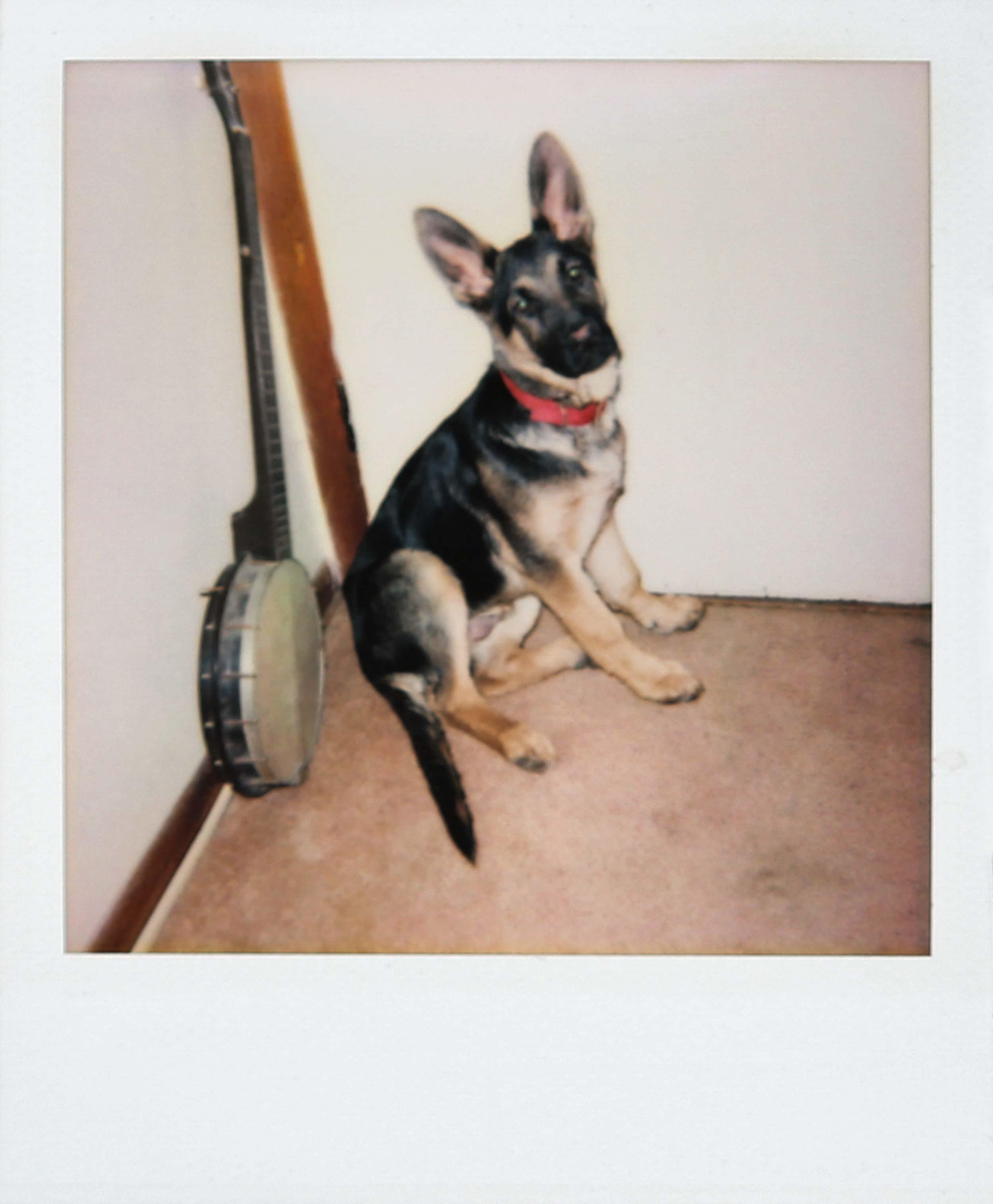 dog-1T4A7509.jpg
