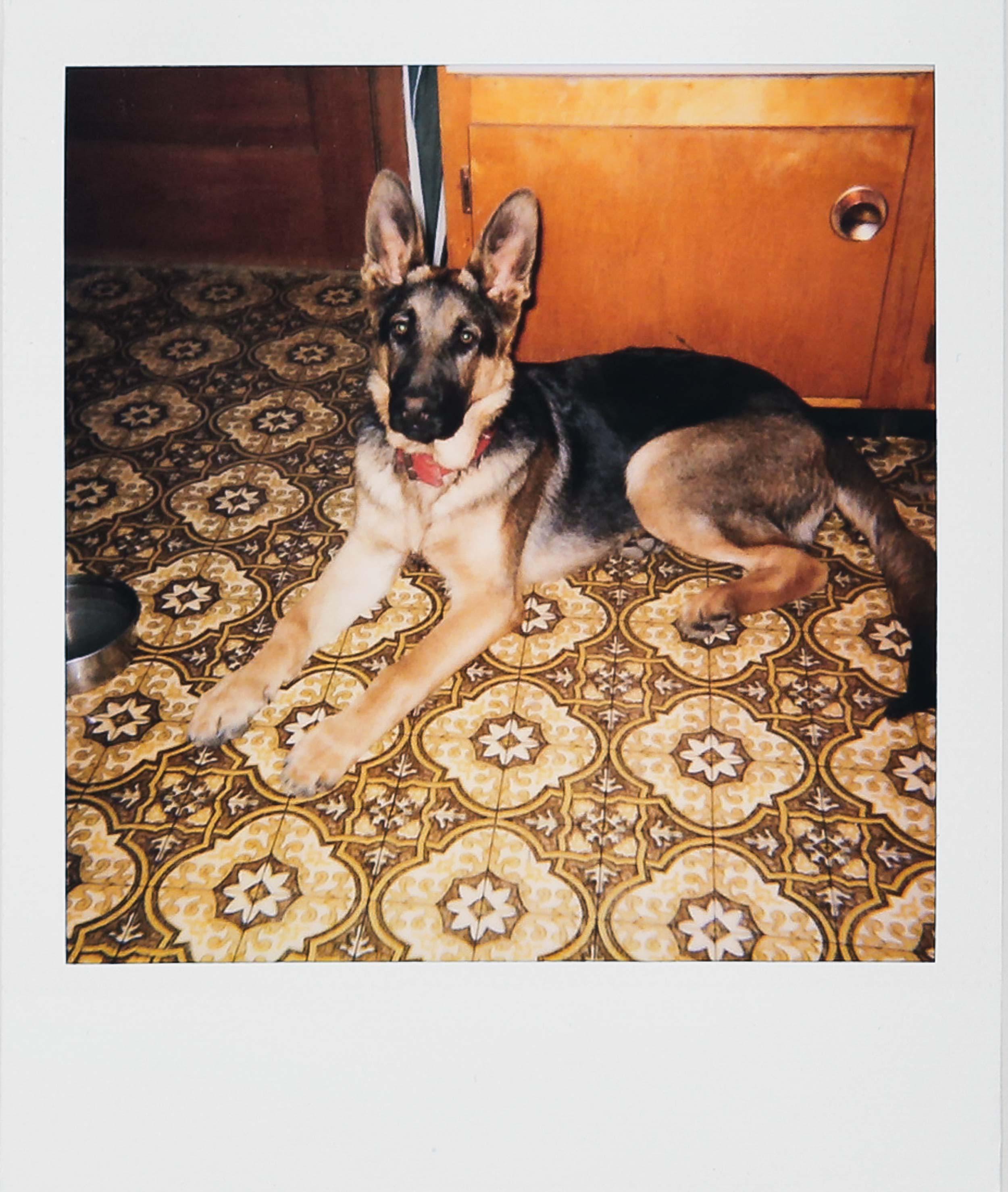 _dog-1T4A7464.jpg
