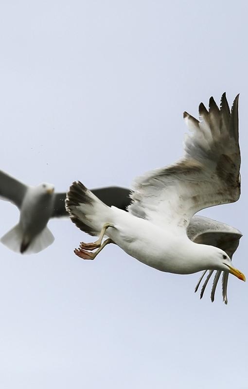 birds in flight copyweb.jpg