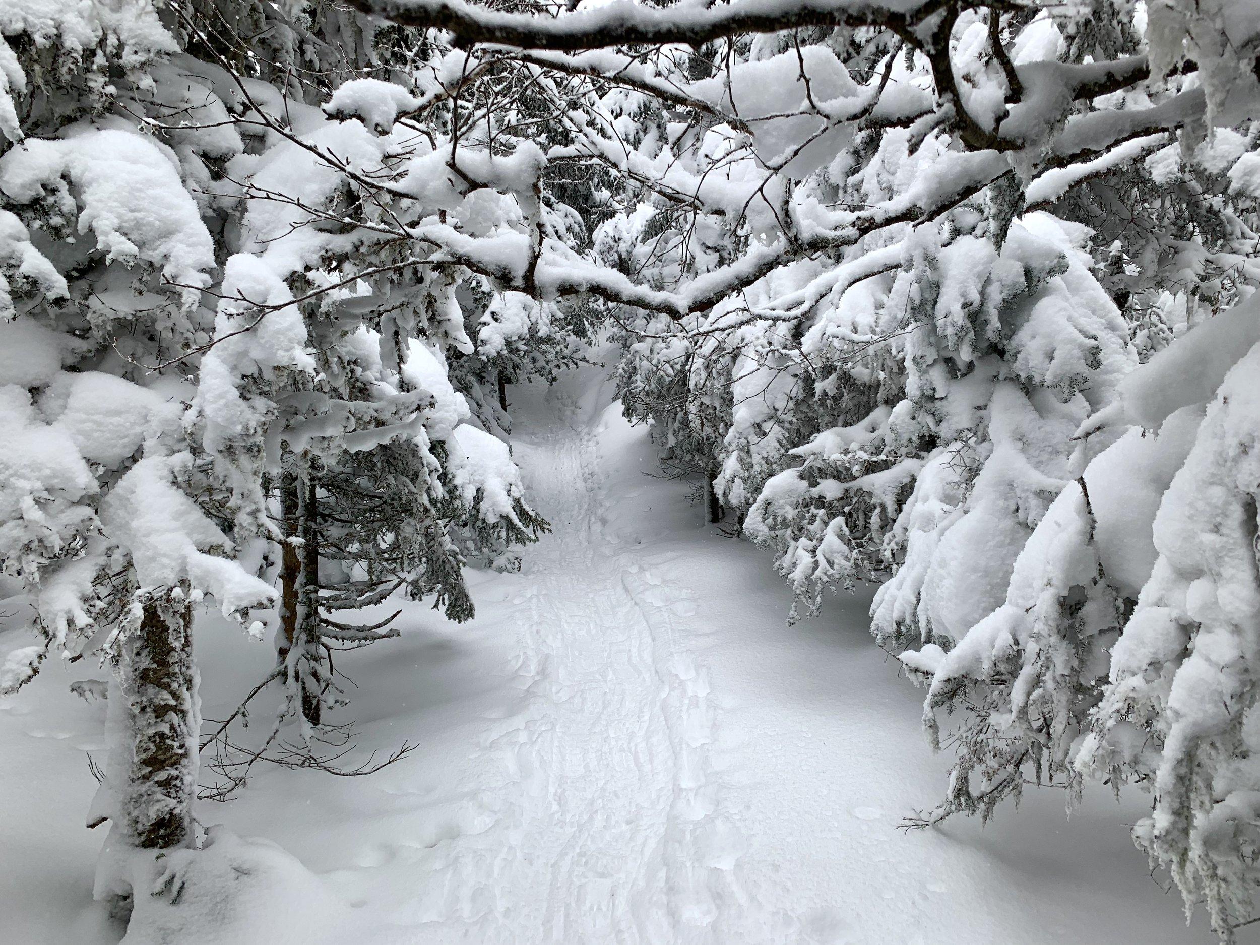 Trail towards Cascade Summit ADK 2019