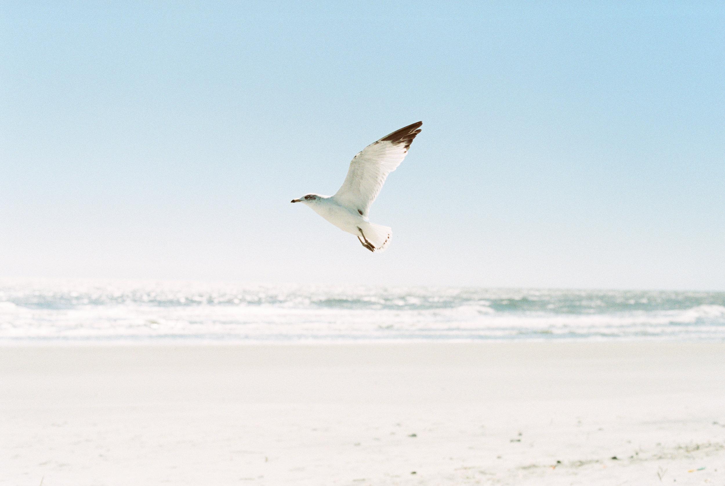 haley-richter-photography-fuji400h-south-carolina-35mm-spring-109.jpg