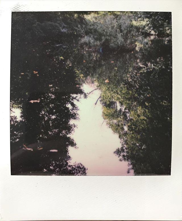 Woodland reflection. #impossibleproject #sx70 #woodland #colourphotography #film #waterlowpark