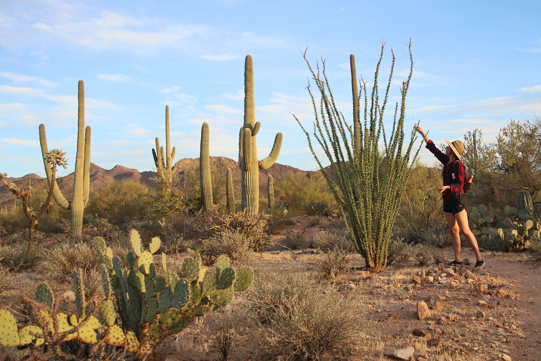 50states-journey-hiking-AZ-saguaronationalpark-kendra.jpg
