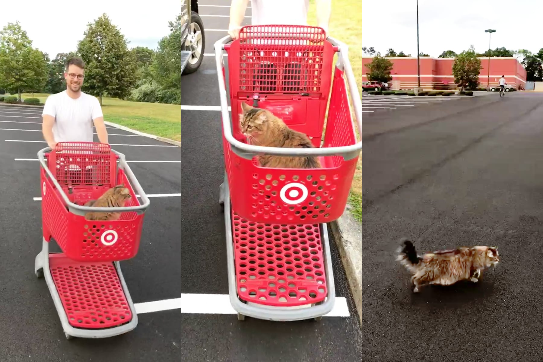 05-RI-journey-targetkitty.jpg