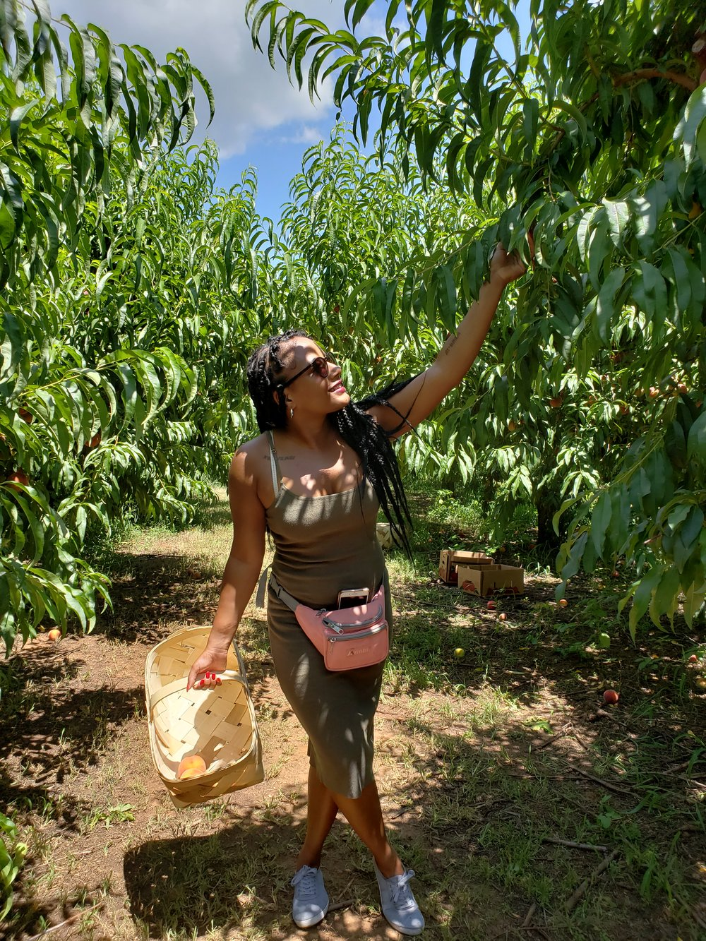 Picking Peaches At Southern Belle Farm | Georgia - Walking through the vineyards to pick peaches and then hanging out in the barn with the goats and cows, I almost thought that I was ready to risk it all... All meaning, my city life for the farm life! Can a city girl survive in the country, farm life? Possibly!