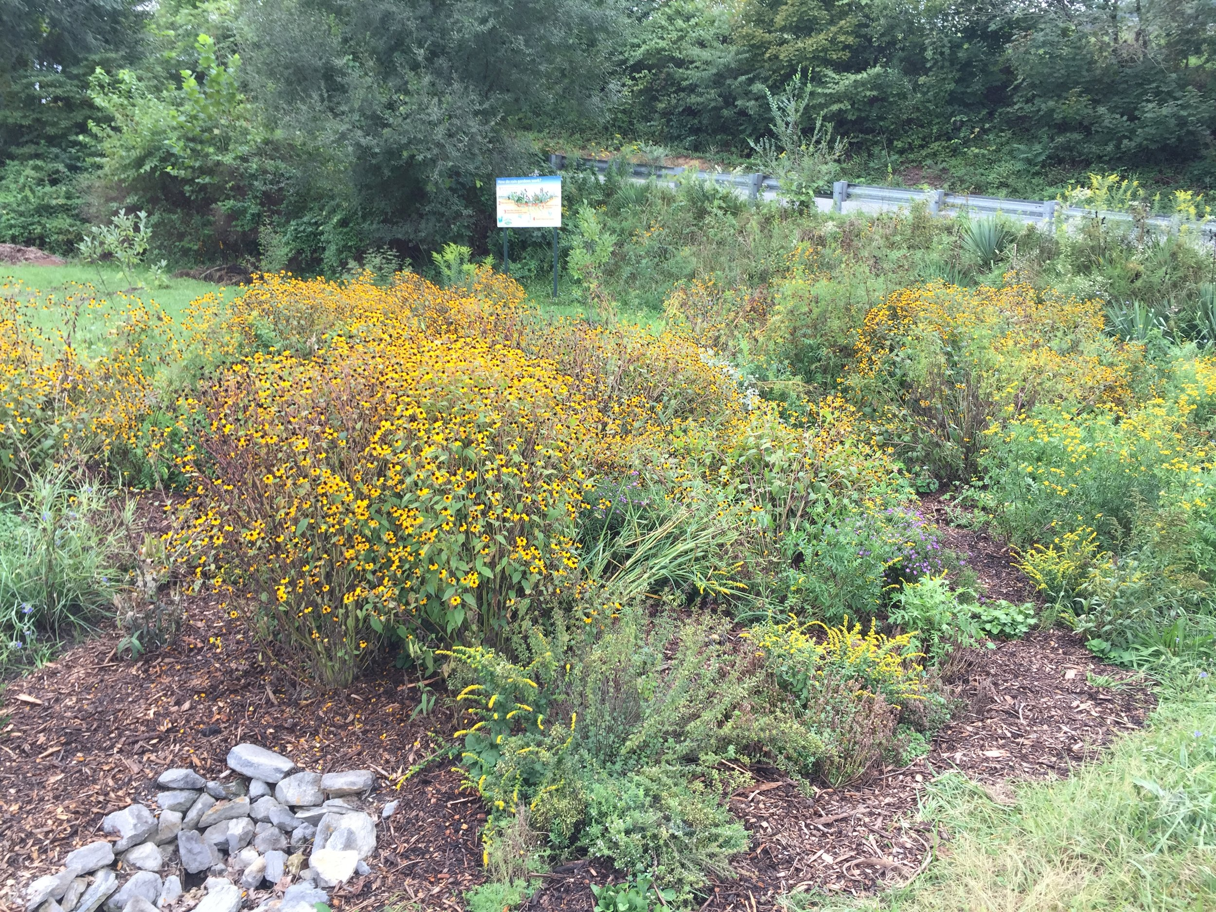 This rain garden is located at the bottom of Greenway Cemetery in Berkeley Springs. The project was made possible by funding from the National Fish and Wildlife Foundation.