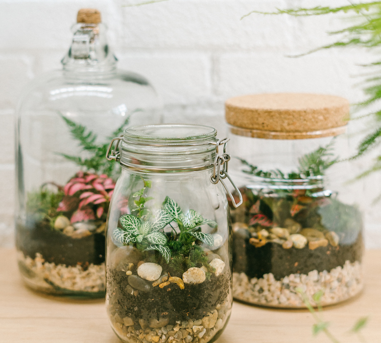 Terrarium Workshop and brunch.jpg