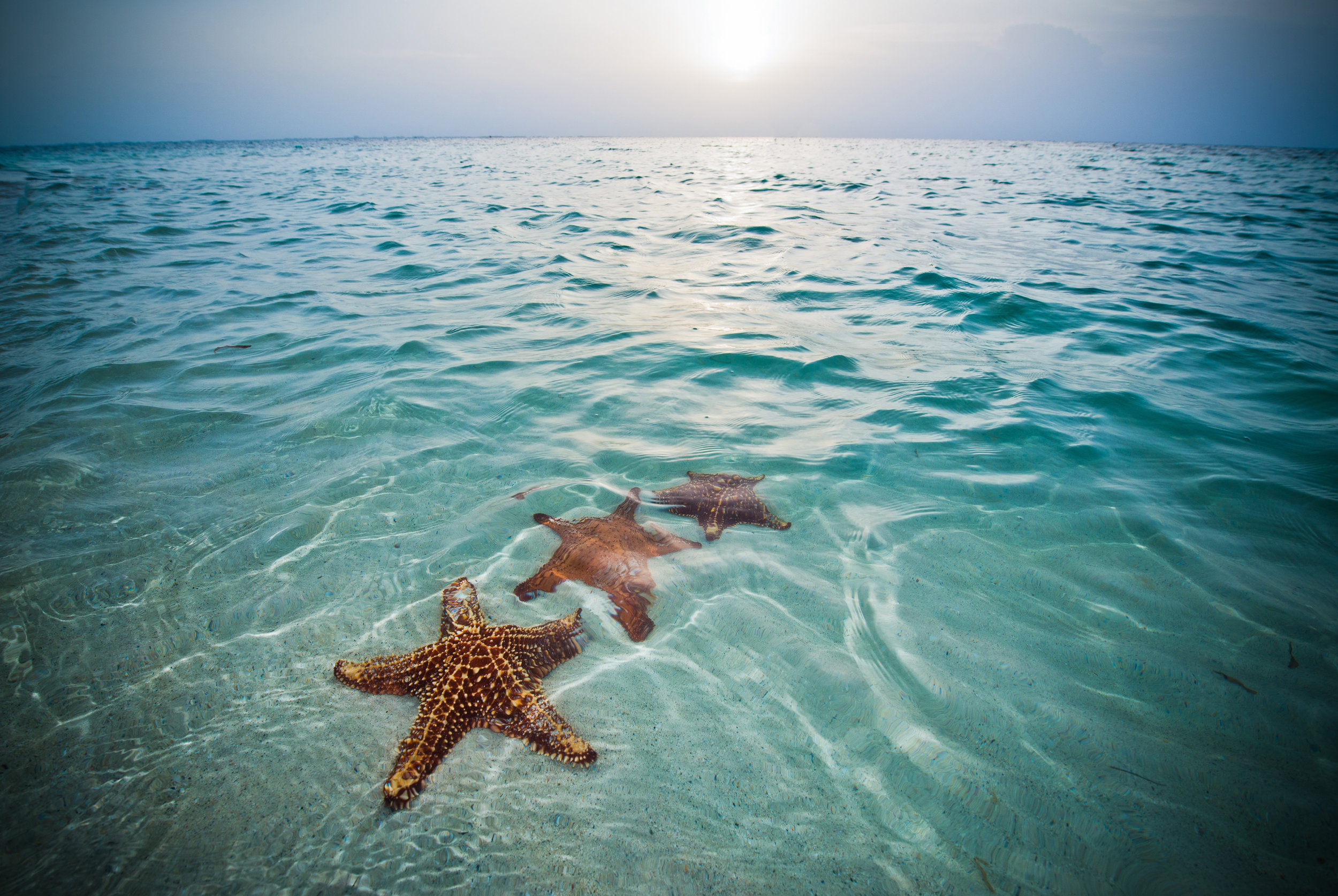 STARFISH_POINT-3.jpg