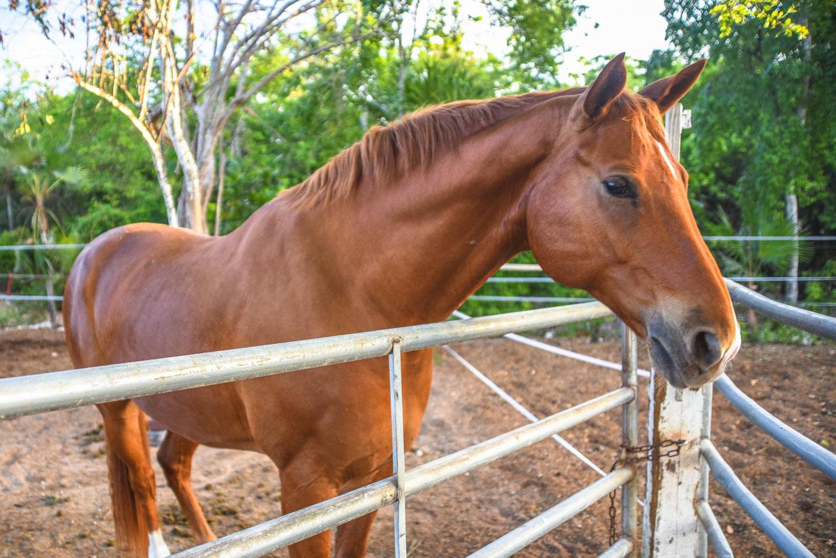 Equestrian-Centre-6.jpg