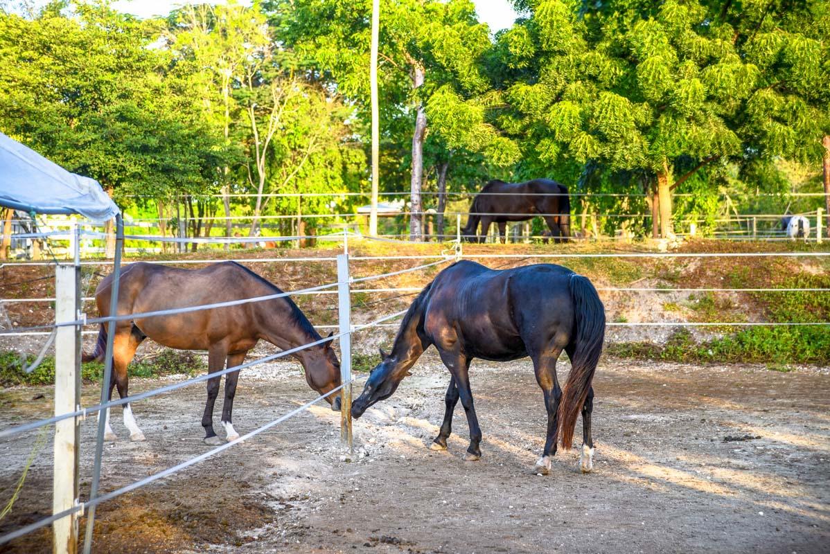 Equestrian-Centre-7.jpg