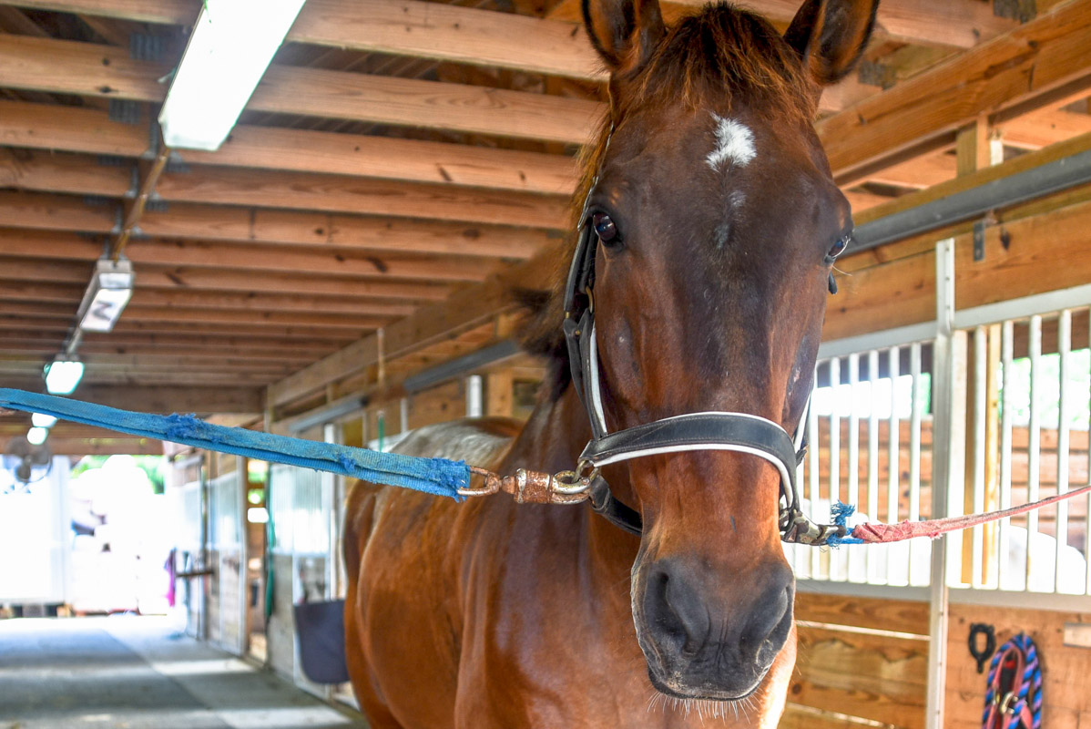 Equestrian-Centre-8.jpg