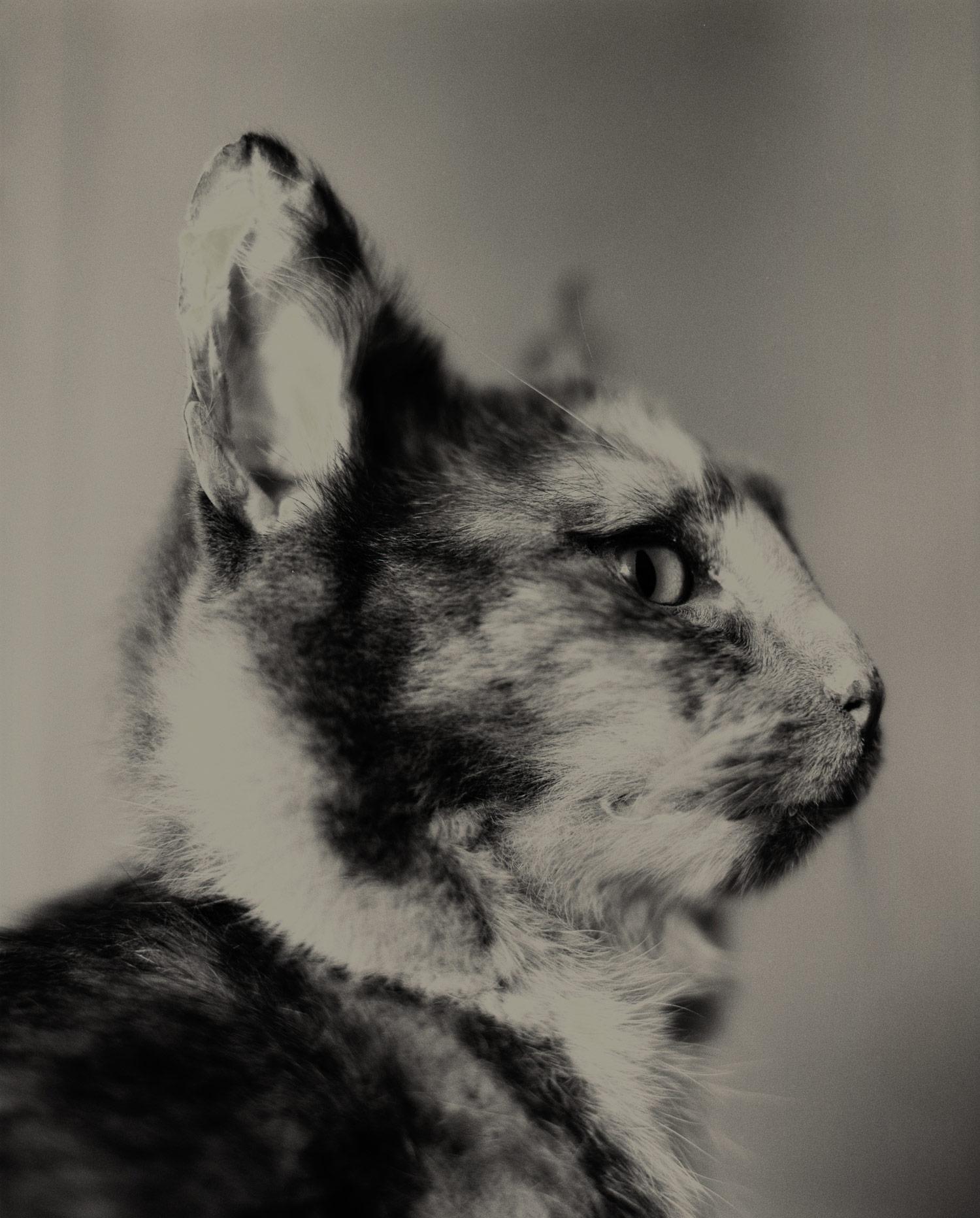 090919_taxi-cat_A1-16.jpg