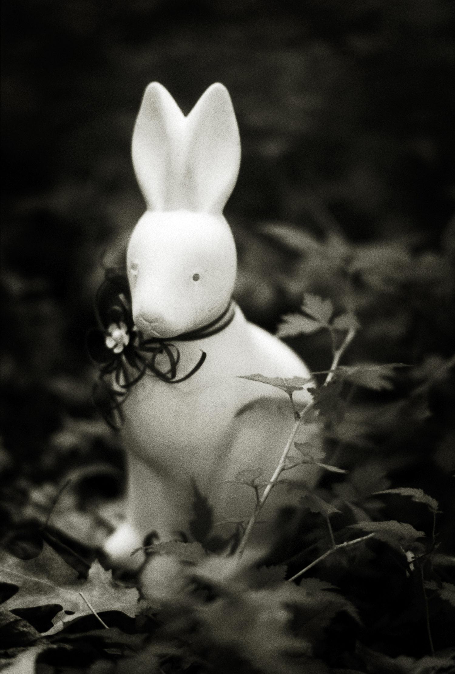 100802_bunnies_1-10.jpg