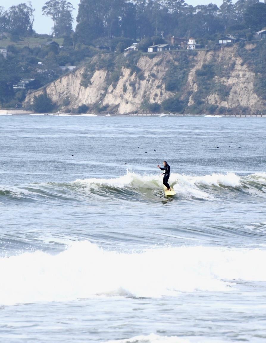 Trimming in Marin County, CA 2017    Photo: Matt Borries