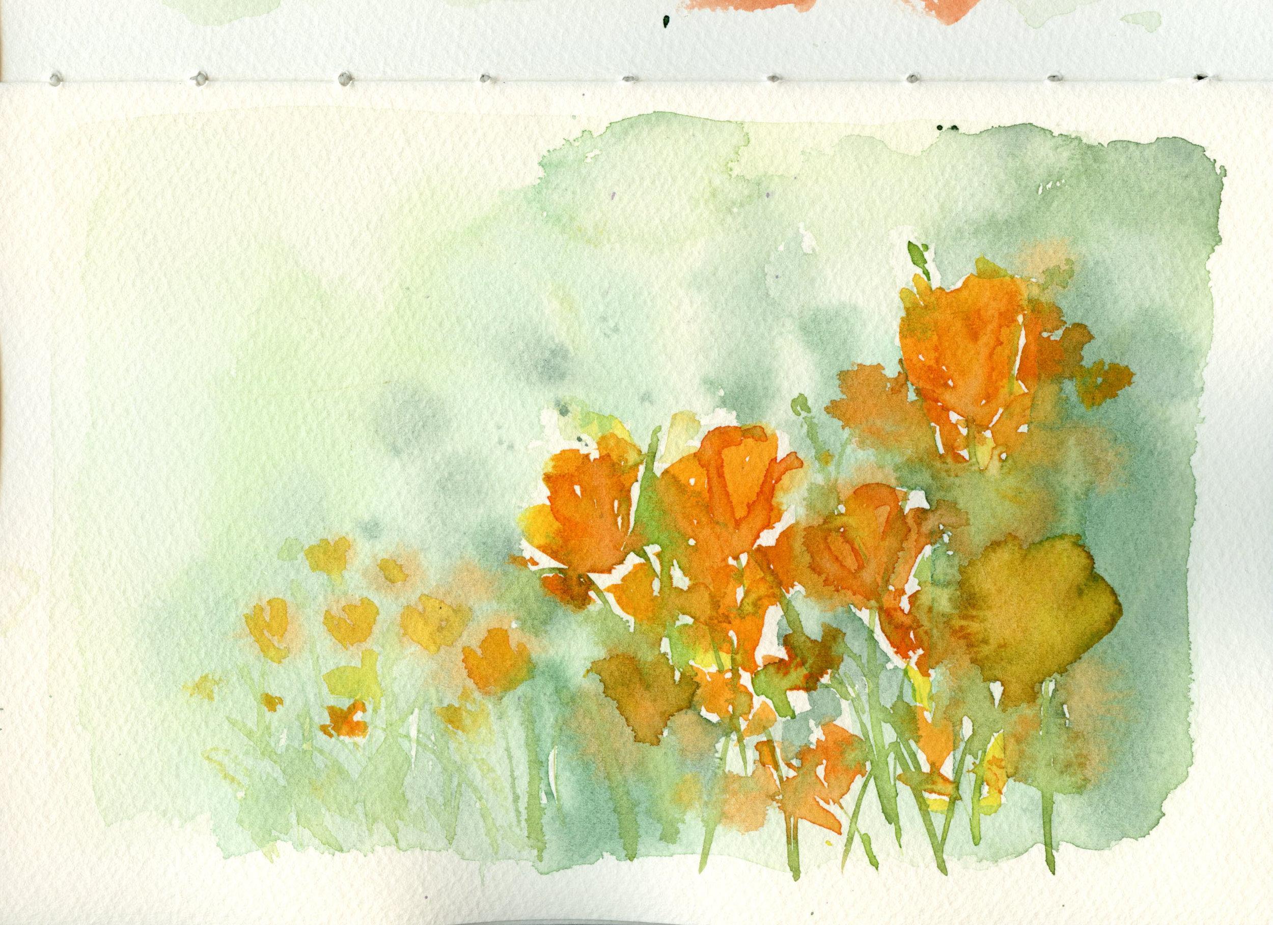 Poppies003.jpg