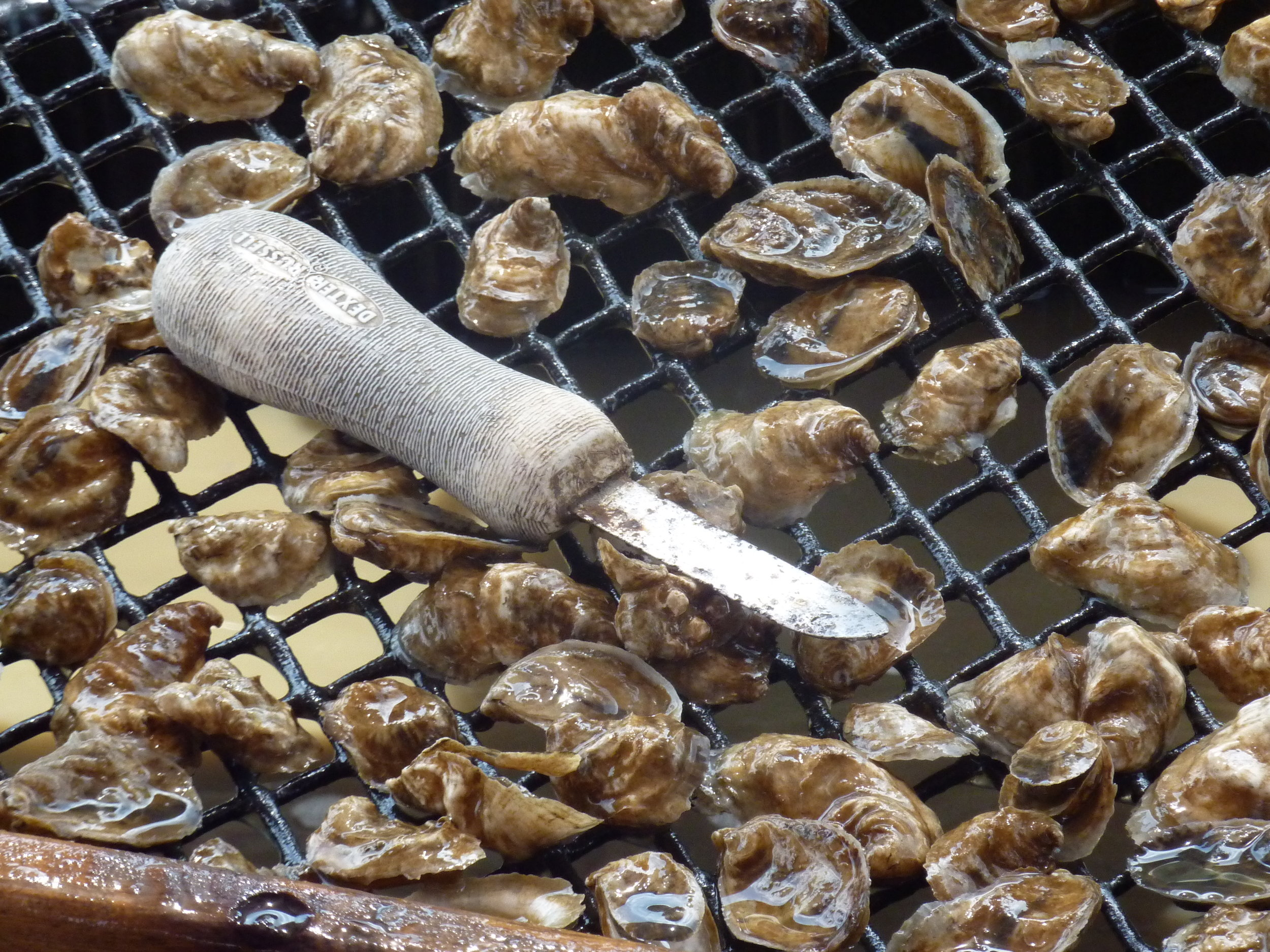Sifting oysters by size. Oyster mariculture is a rapidly growing activity in North Carolina, but with its growth come new social and ecological interactions in coastal waters. Here small oysters are sifted so they can be separated into differently-sized mesh bags for grow-out on a local shellfish farm. (Photo: L. Fairbanks)