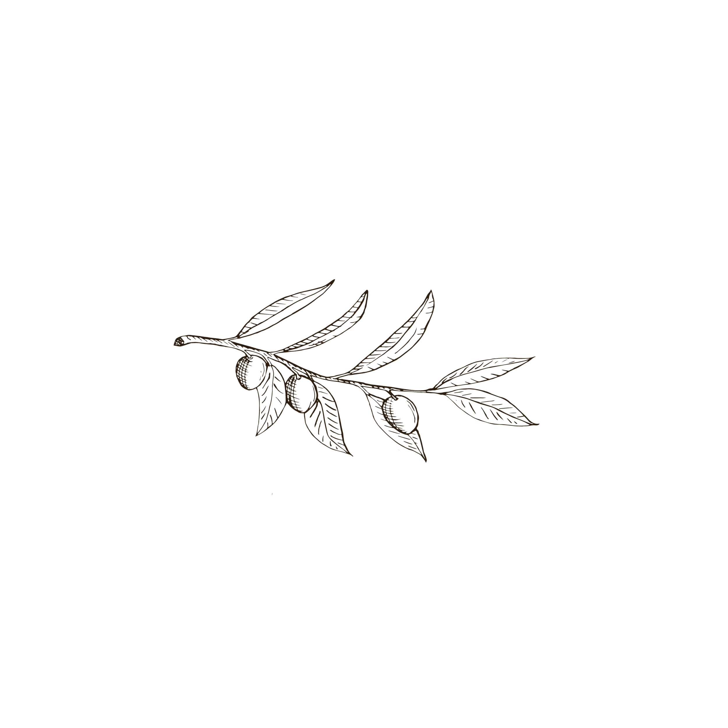 Focal Photography logo olive branch.png