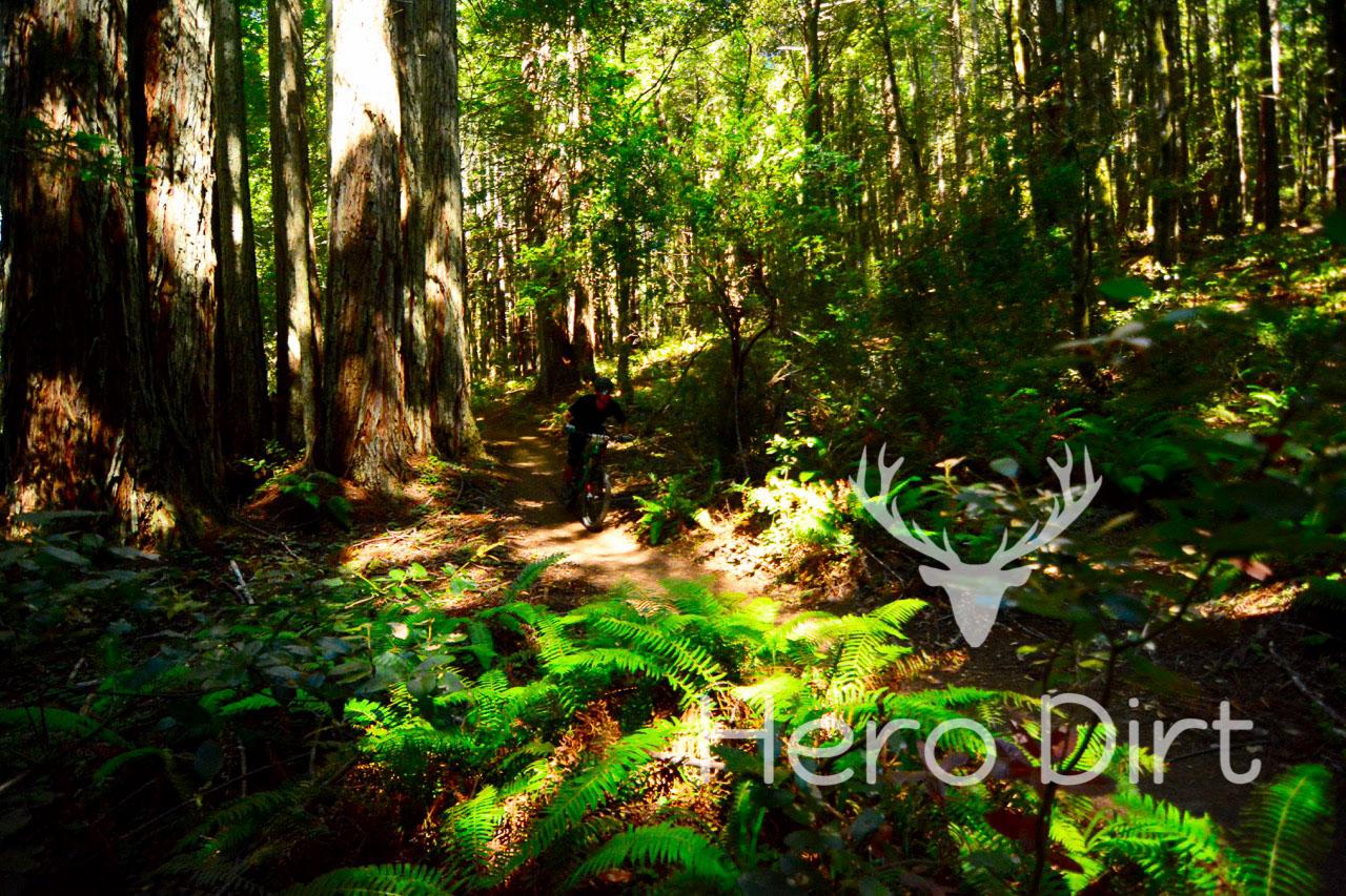 Wildwood Enduro 2017-97.jpg