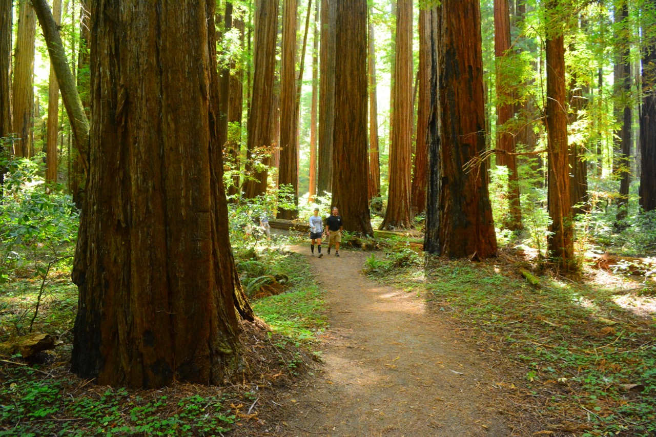Marin County Birthplace of the mountain bike Muir Woods National Monument guided Redwood Hike