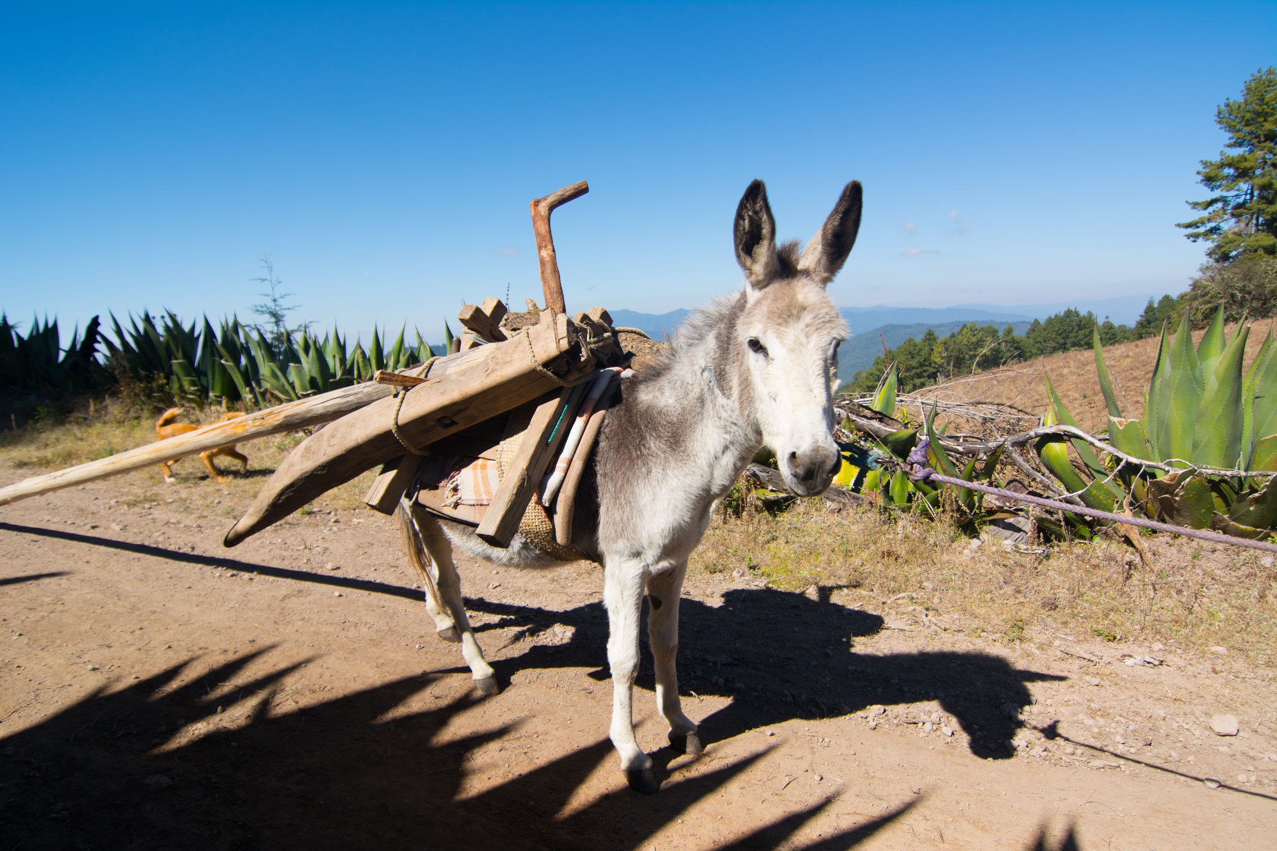 Trail Companions mountain biking in the Sierra Norte Mountains of Oaxaca