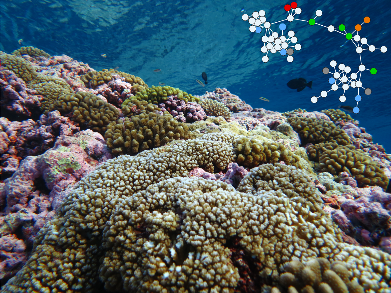 Coral reefs produce a wide diversity of small molecules that are involved in primary and secondary metabolism. This picture r