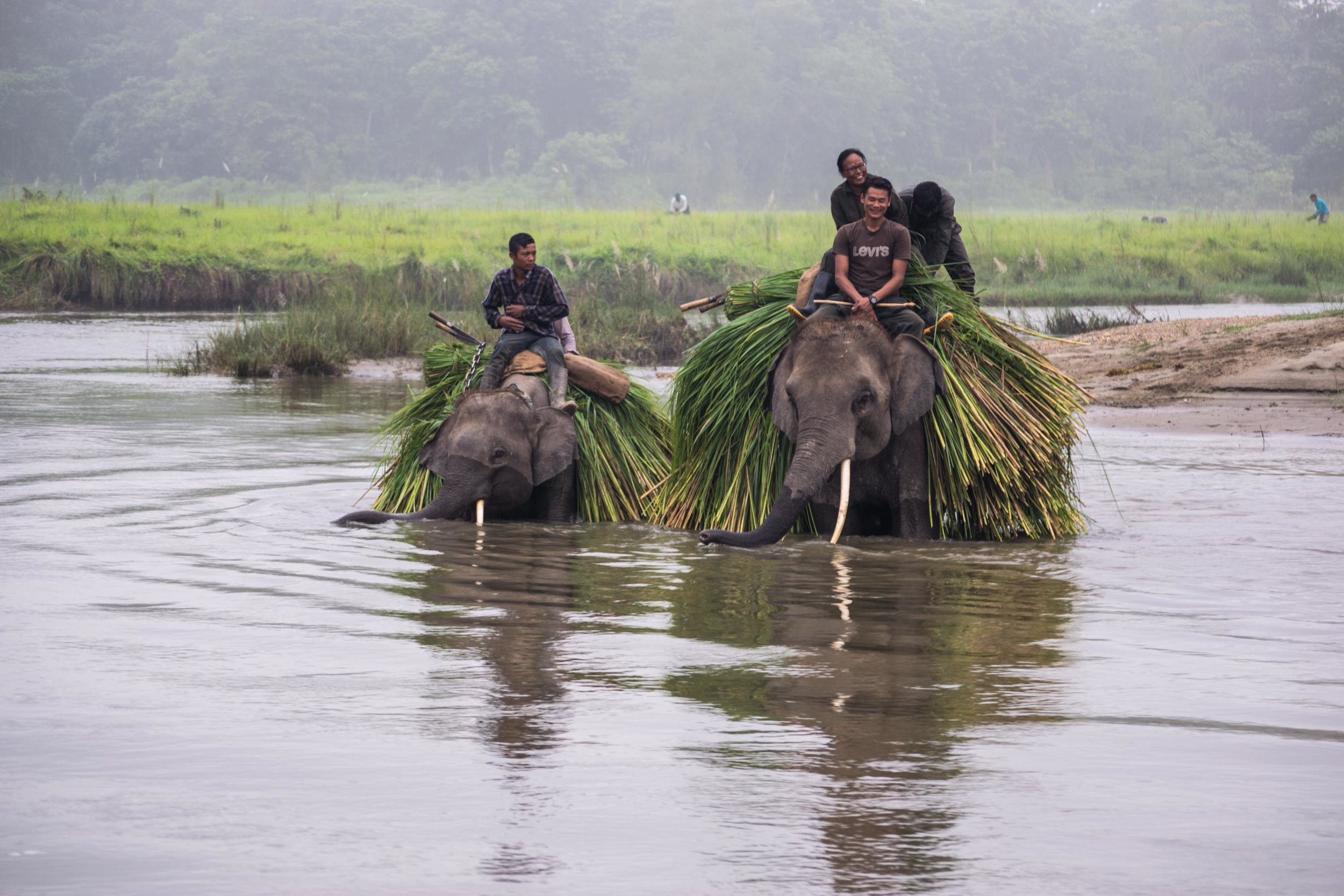 Elephants In The River (1 of 1).jpg