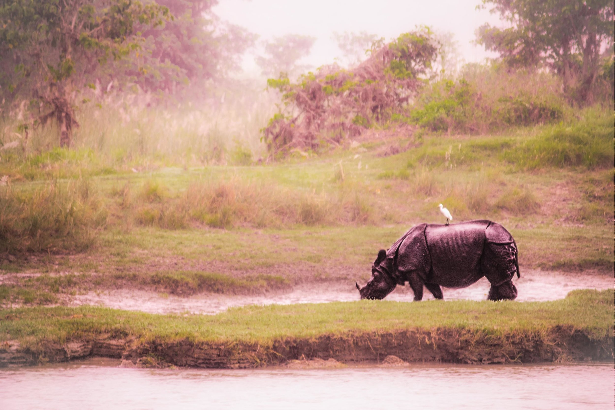 Rhino On The River (1 of 1).jpg