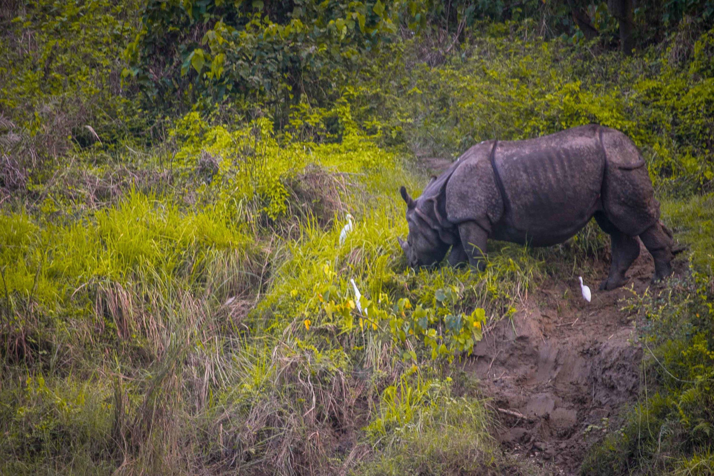 Rhino (1 of 1).jpg