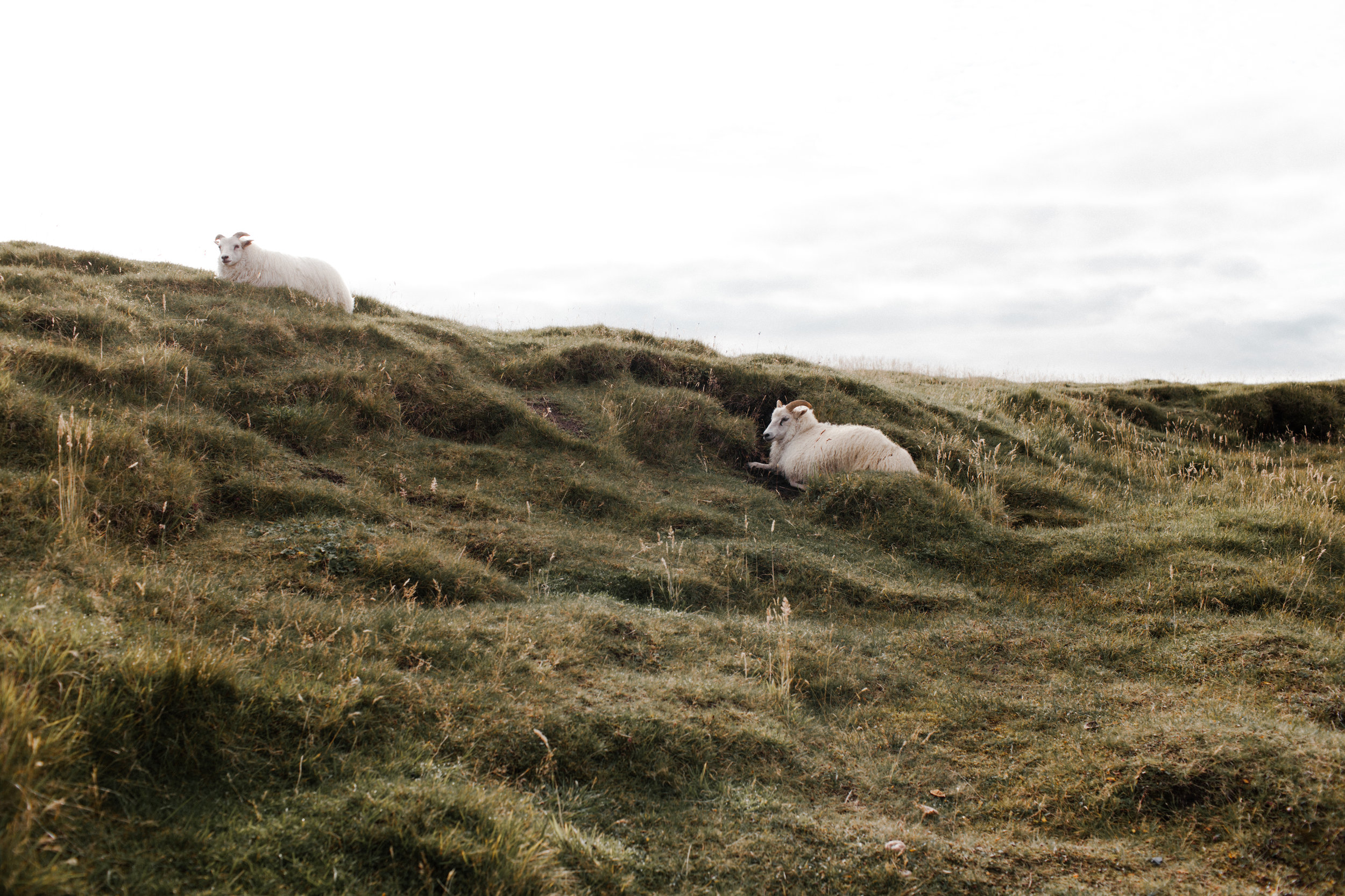 Evernew-Iceland-5797.jpg