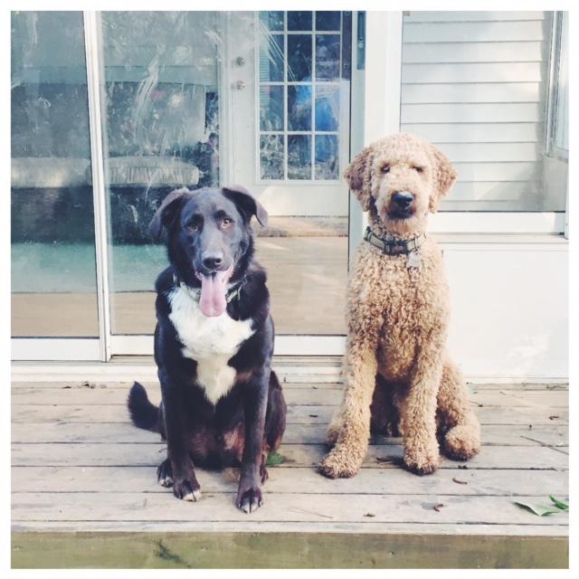 pups.jpg