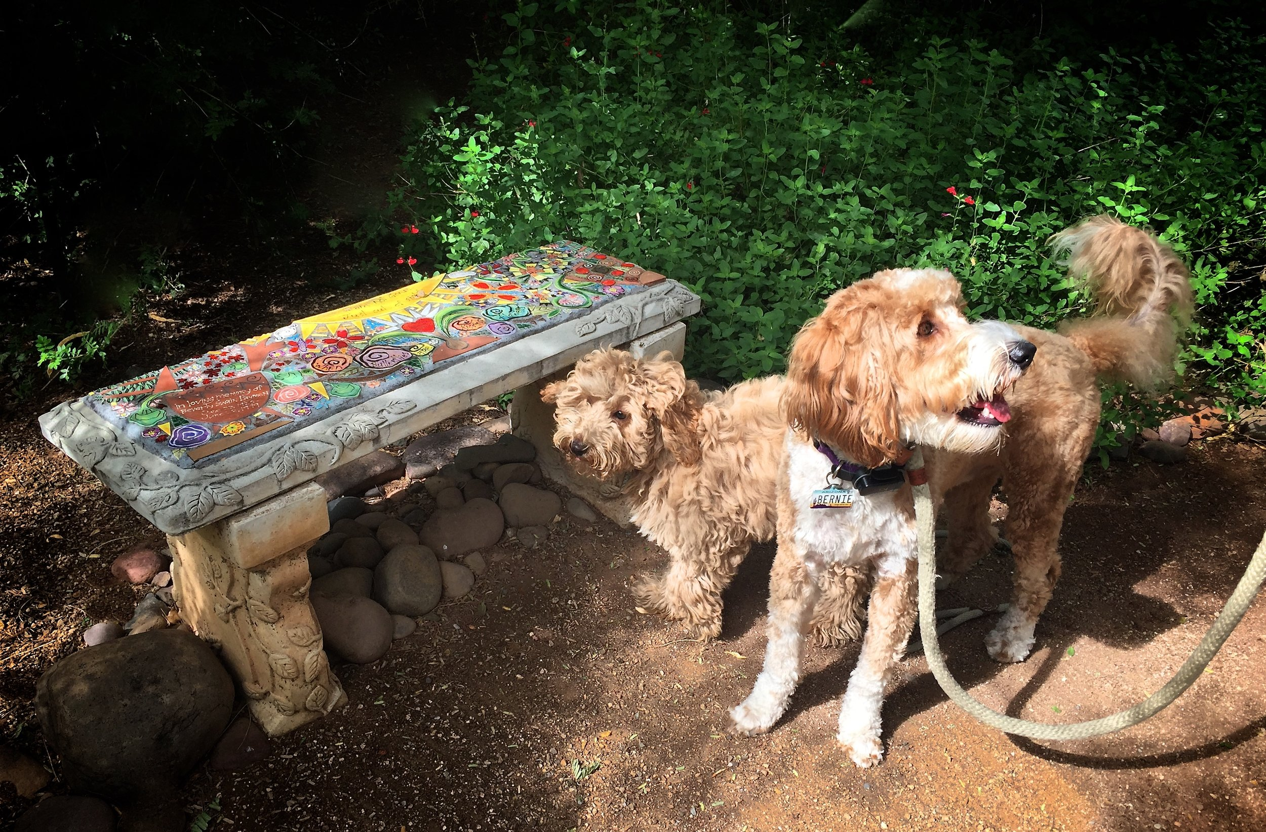 Bernie and LIzzie sniffed every bench we came across in the Tucson Botanical Gardens.