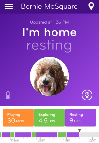 Resting purple activity message screen where the Nuzzle app also displays your pet's profile picture.