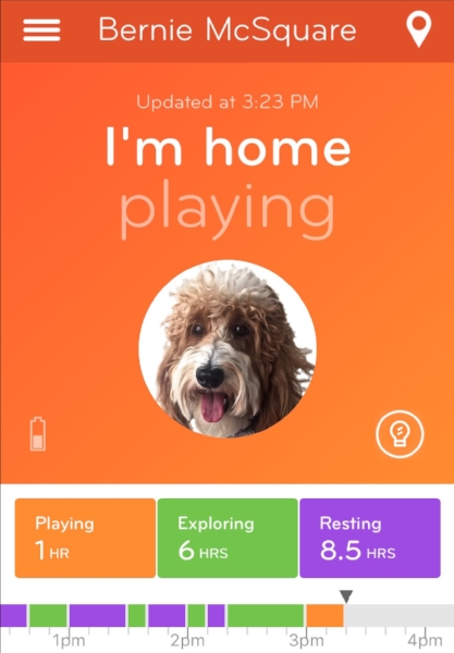 Playing orange activity message screen where the Nuzzle app also displays your pet's profile picture.
