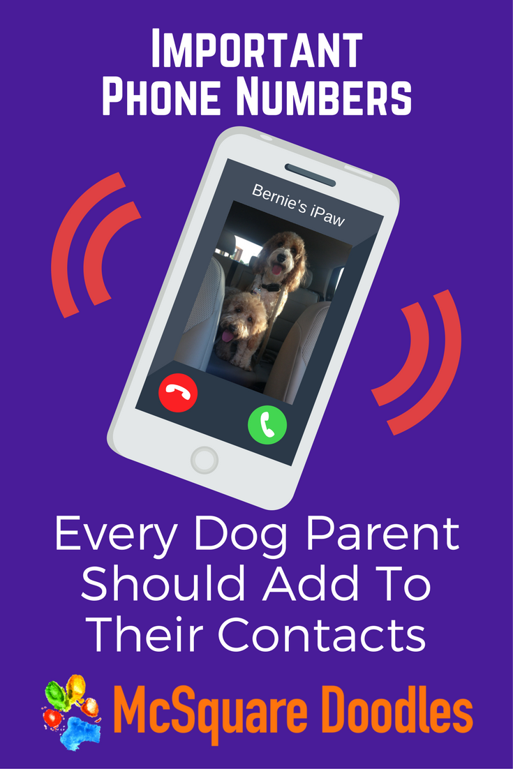 Every dog parent should have these phone numbers handy in their Contacts. You never know when you may need this information quickly.
