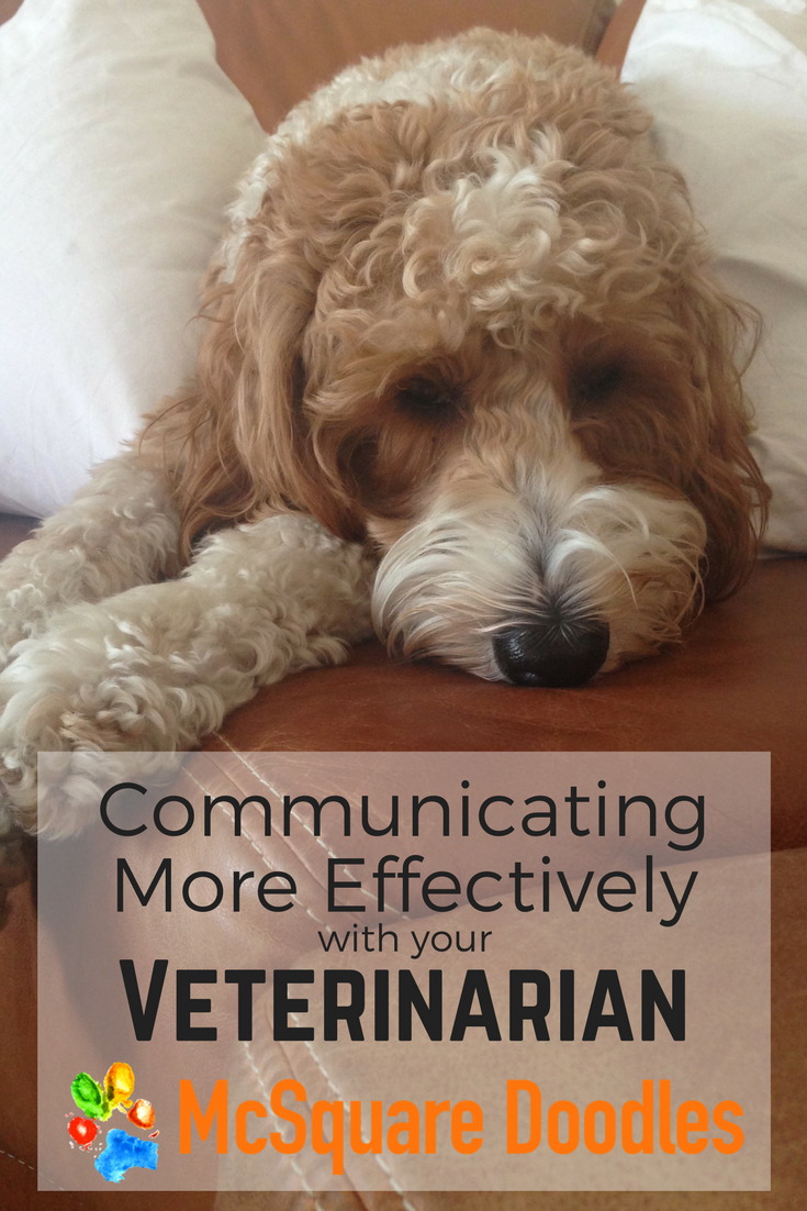 Communicating More Effectively with your Veterinarian