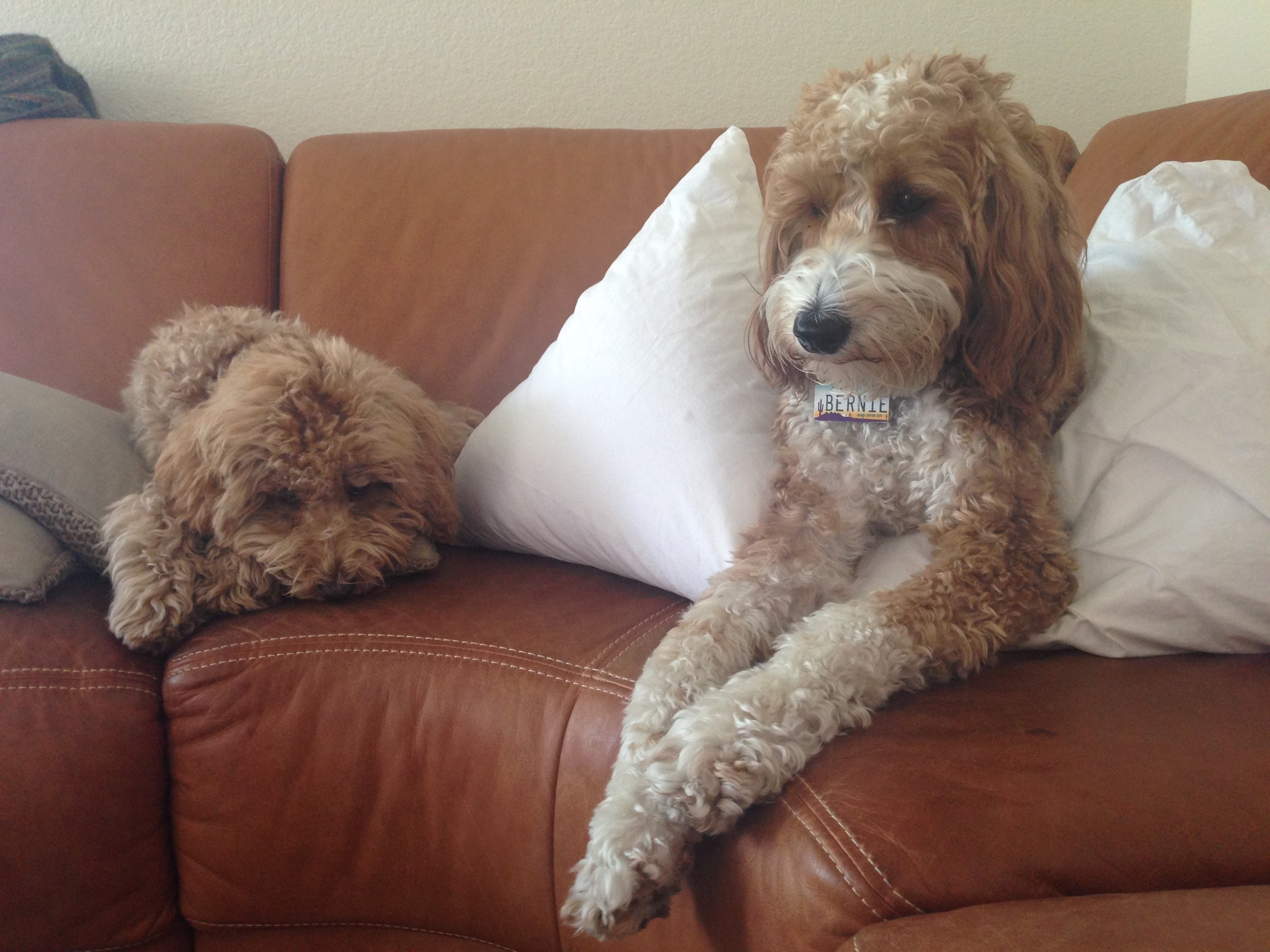 Bernie lounges on the living room couch with his pillow while Lizzie remains by his side as his supportive little sister.