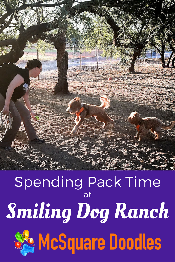 Spending Pack Time at Smiling Dog Ranch Dog Park in Tucson, Arizona.