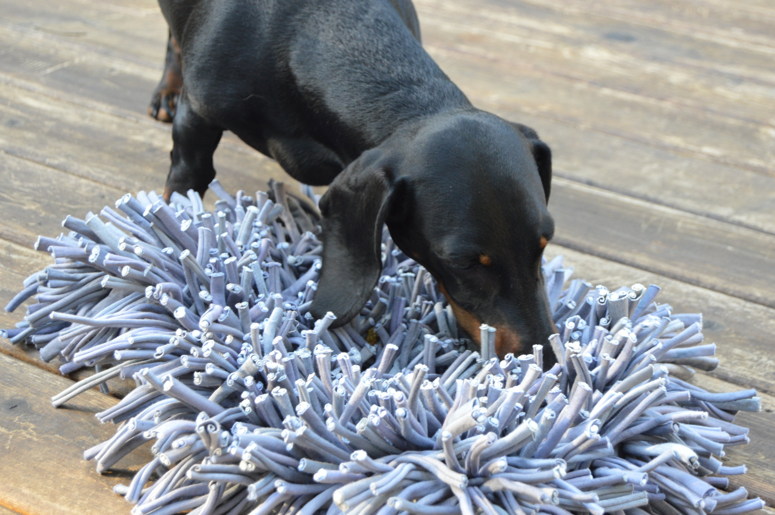 Walter focuses on finding food in his Snuffle Mat.