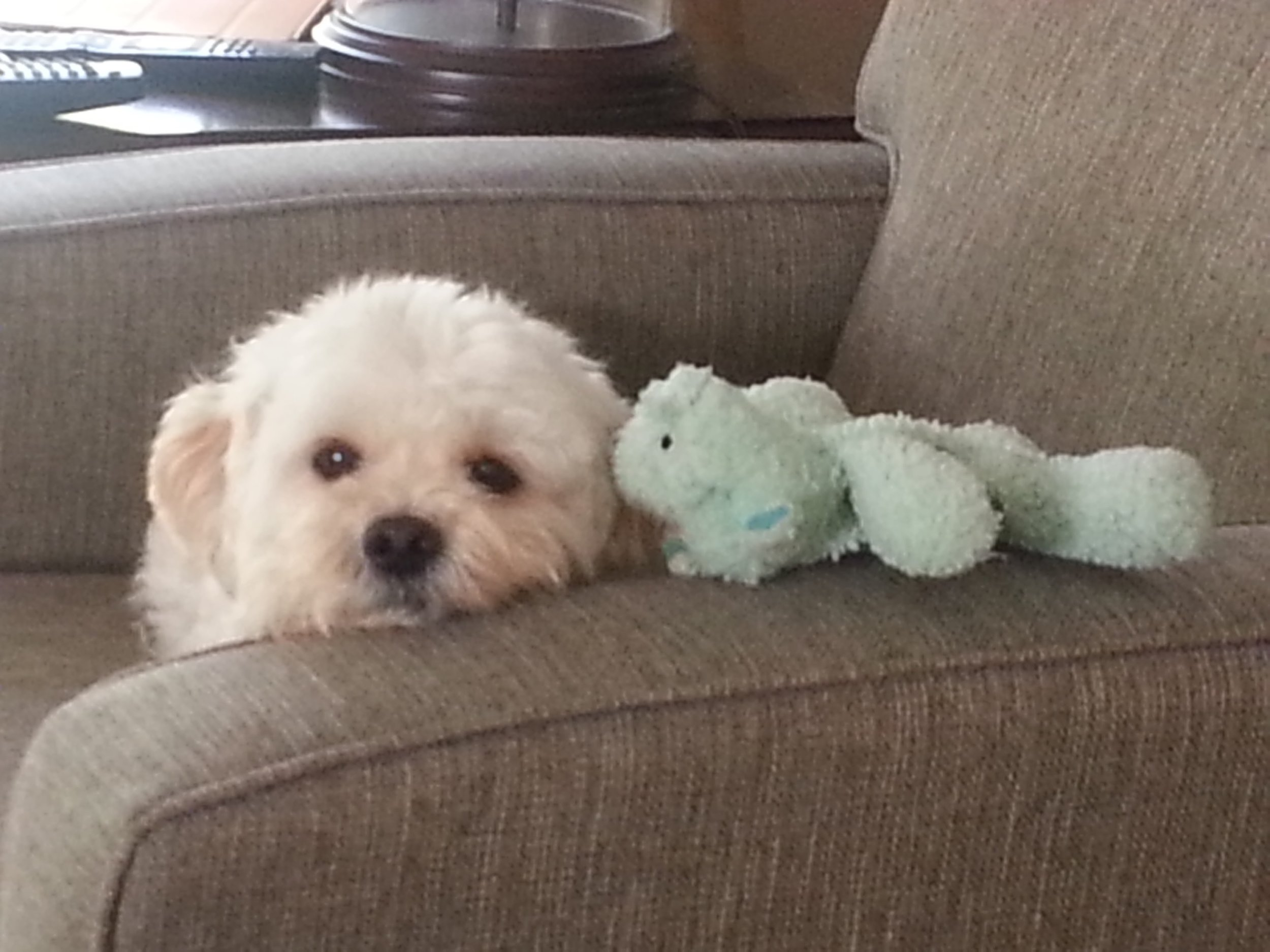 Henry with one of his three hippos.