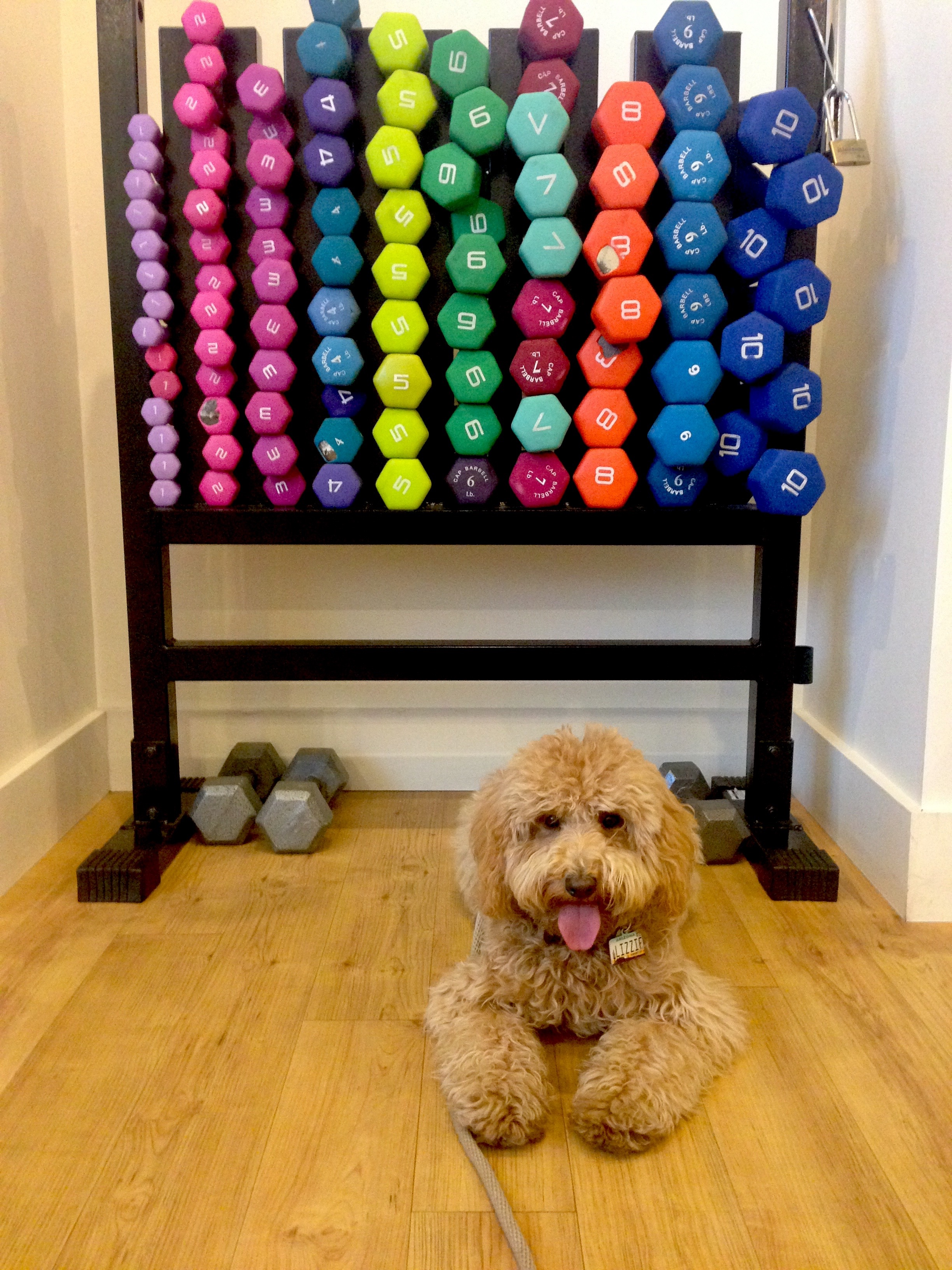 On our second visit, we arrived early enough for Lizzie to explore a bit more and enjoy various athletic sniffs like this weight set at The Core at LaEncantada.