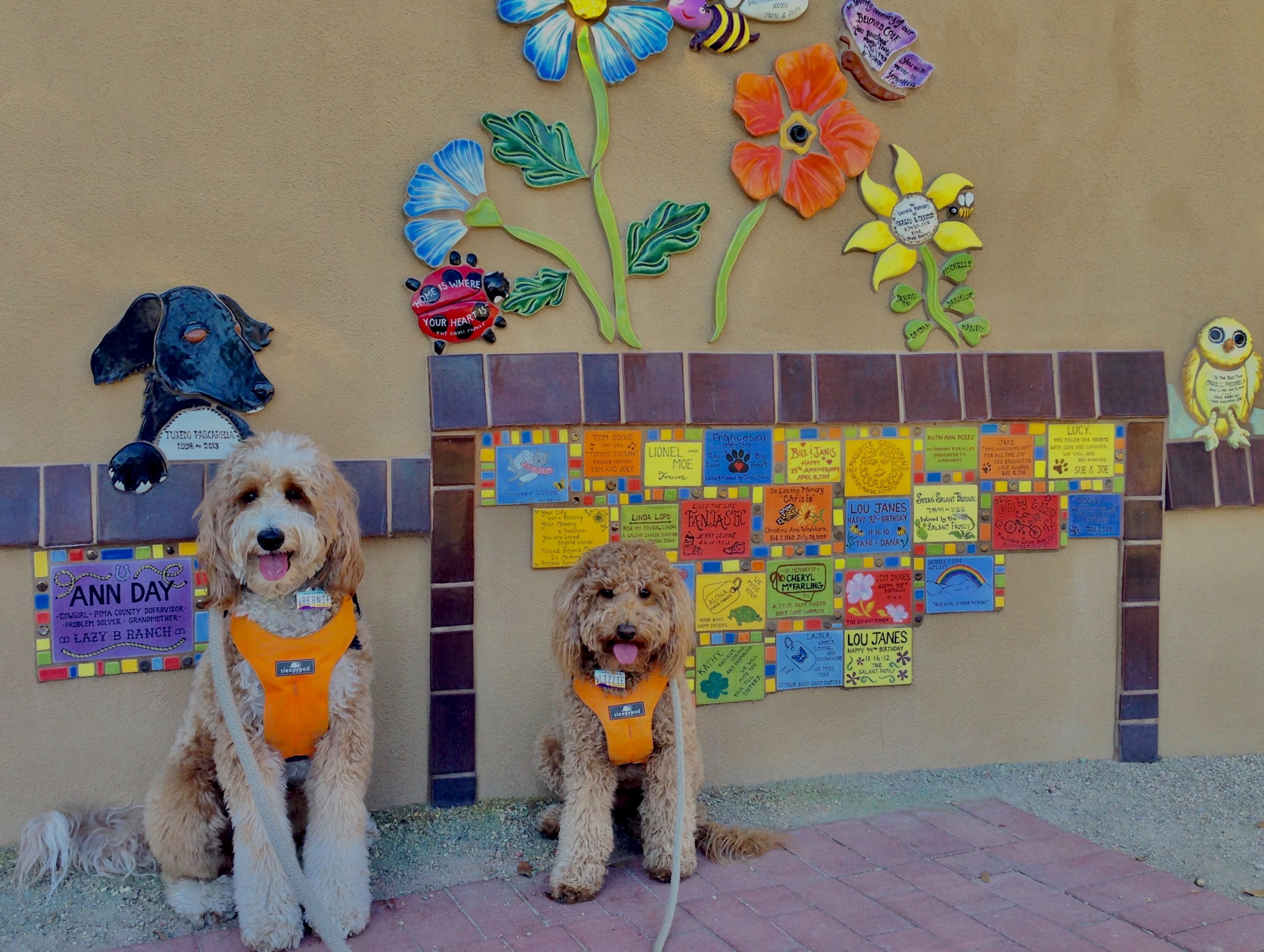 Bernie and Lizzie McSquare loved exploring the Butterfly Memorial Garden for Brandi Fenton on the Rillito River Park Path. The colorful tiles and designs were scattered all around the garden.