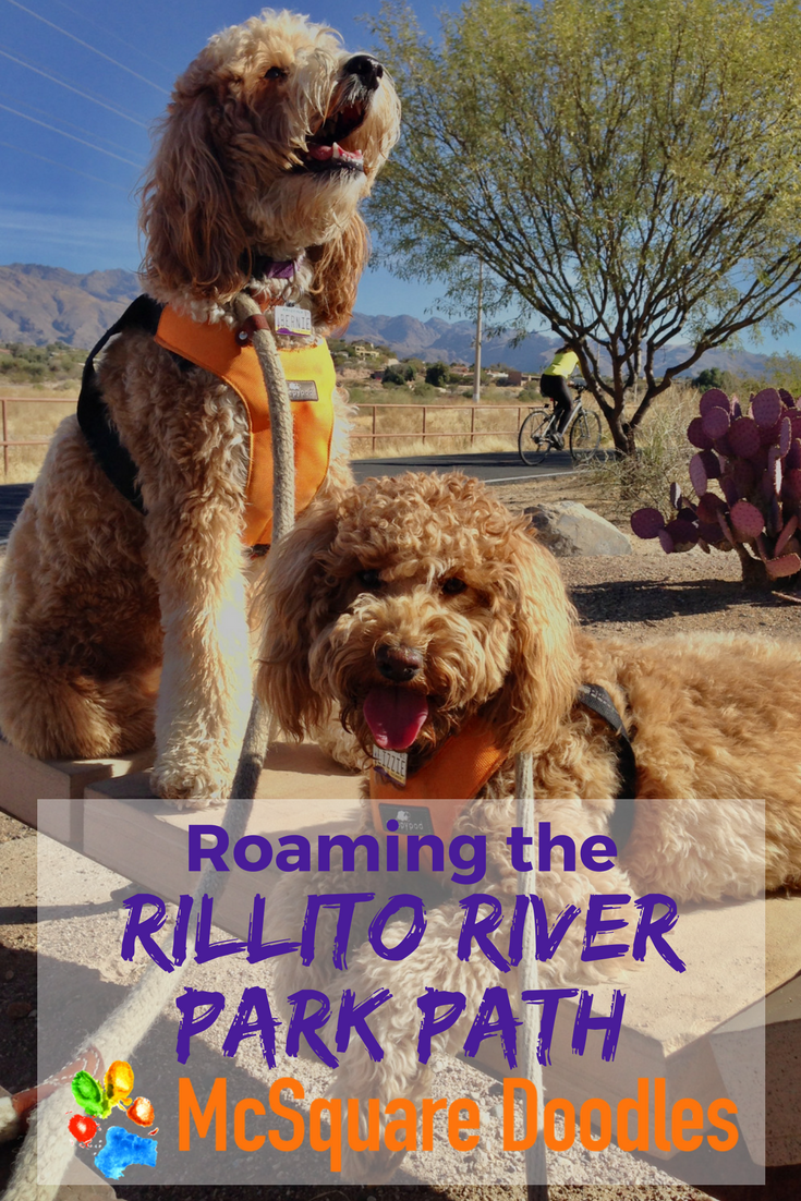 Roaming the Rillito River Park Path: Loop between Brandi Fenton Memorial Park and North Sawn Road in Tucson, Arizona.