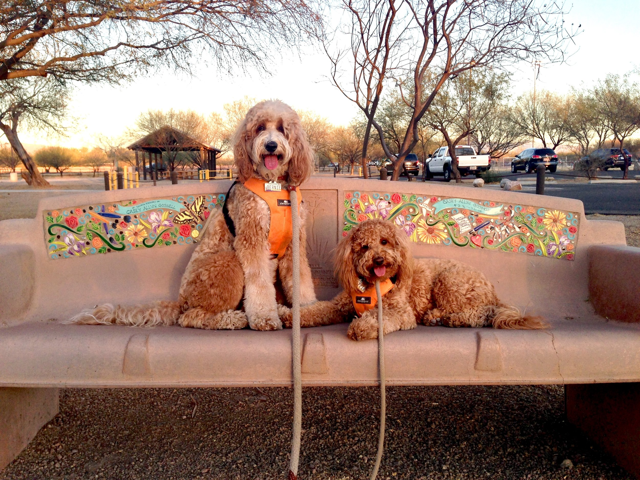 Just outside the Brandi Fenton Memorial Garden, there is a row of benches decorated with colorful garden-themed tiles. Bernie and Lizzie practice their sit-stay and down-stay on one of the benches.