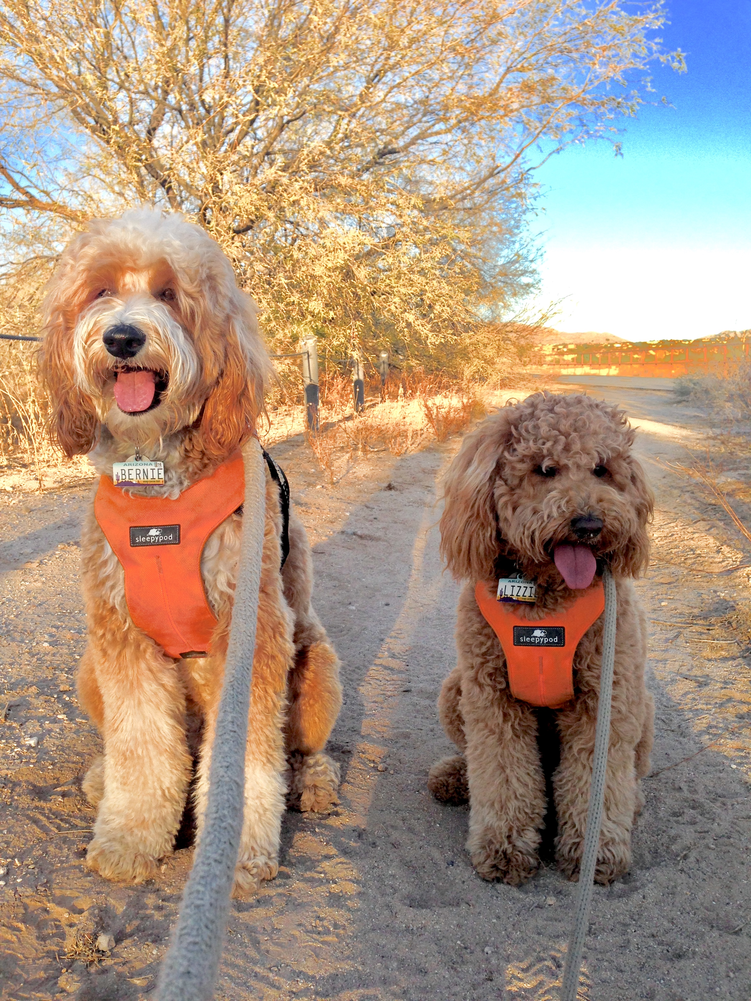 Bernie and Lizzie McSquare prefer walking on the trails on the RIllito River Path. Here they're sitting on the sandy path just outside of George Mehl Park.