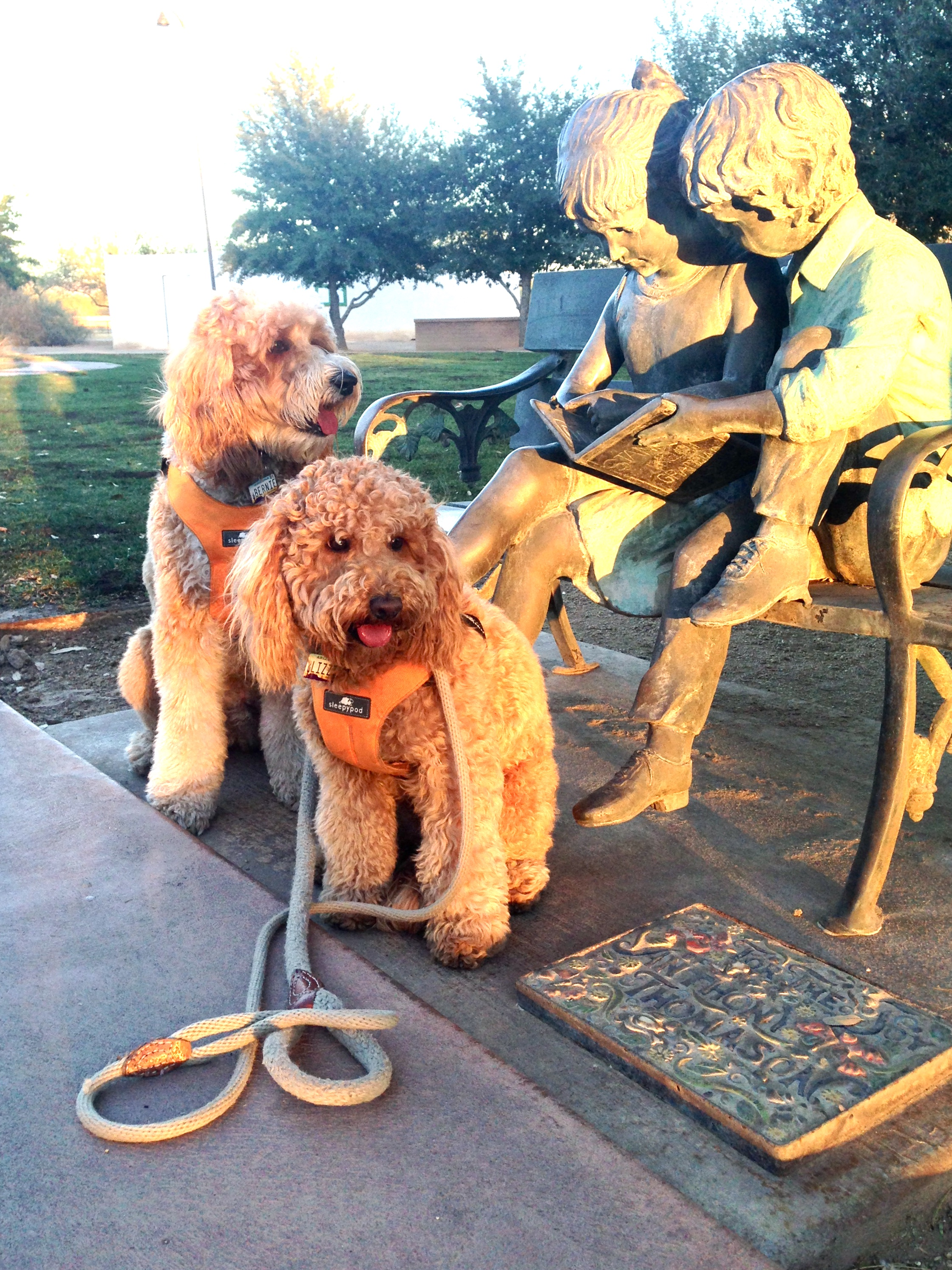 Bernie and Lizzie McSquare practice a sit-stay next to the statue of two children reading a book inside the Brandi Fenton Memorial Garden in Tucson, AZ.