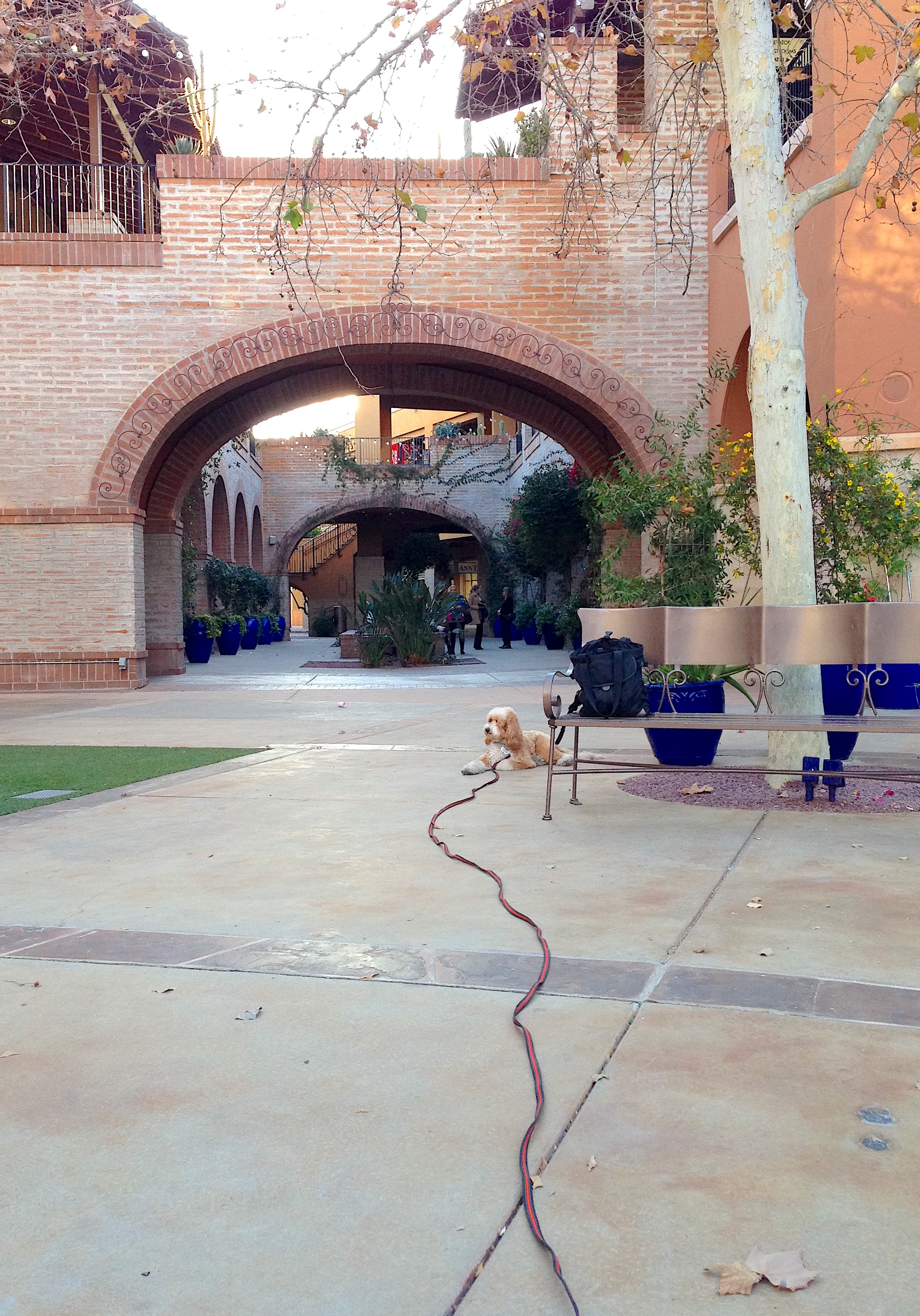 Bernie McSquare practices his down-stay with several people chattering away behind him at la Encantada Shopping Center in Tucson, Arizona.