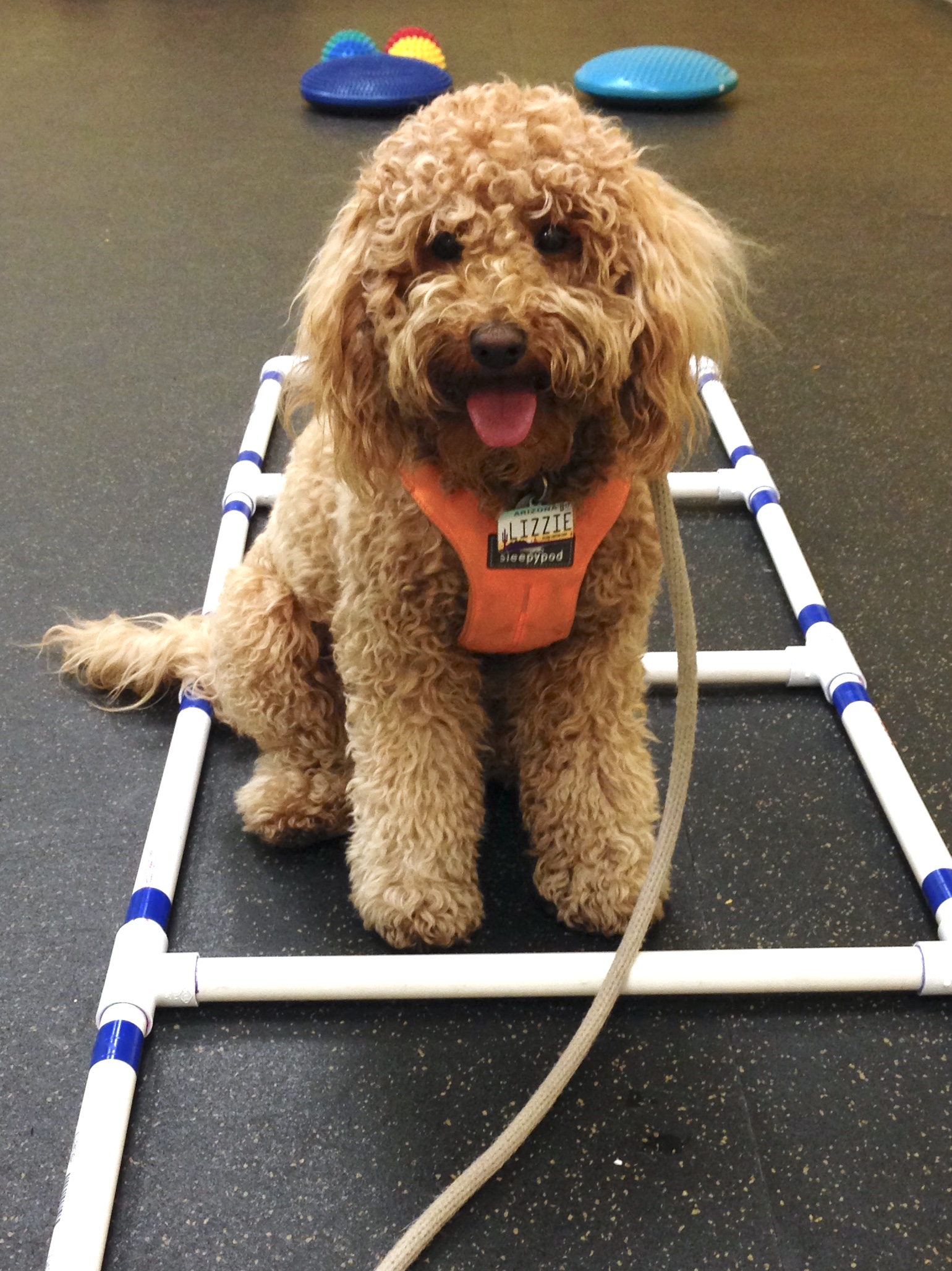 Lizzie practices a proper sit between the rungs of the ladder. This station on the obstacle course requires her to be more intentional with her movements.