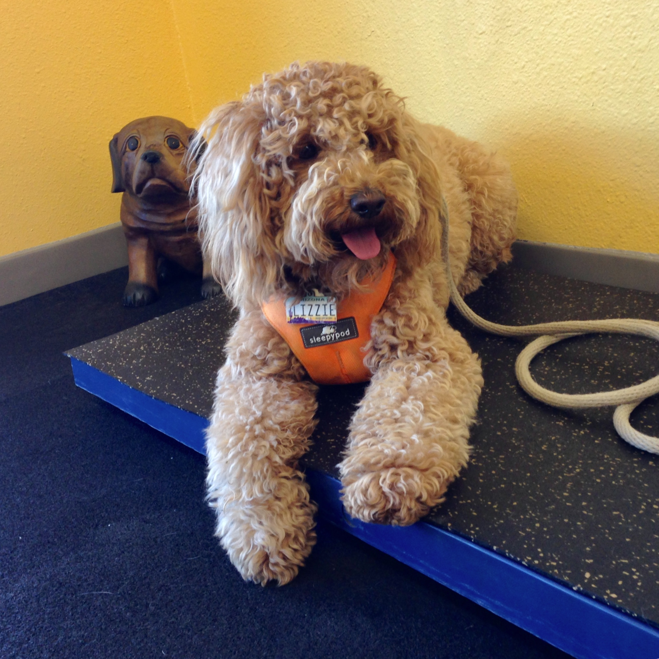 The doggie scale in the lobby of A Loyal Companion helped me track Lizzie's weight over the four-week class. She remained a consistent 20.6 pounds, even on her birthday.