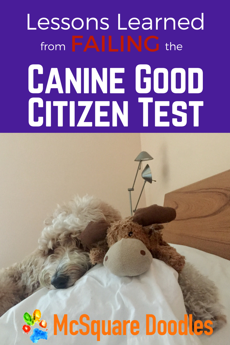 What I Learned from Failing our Canine Good Citizen Test