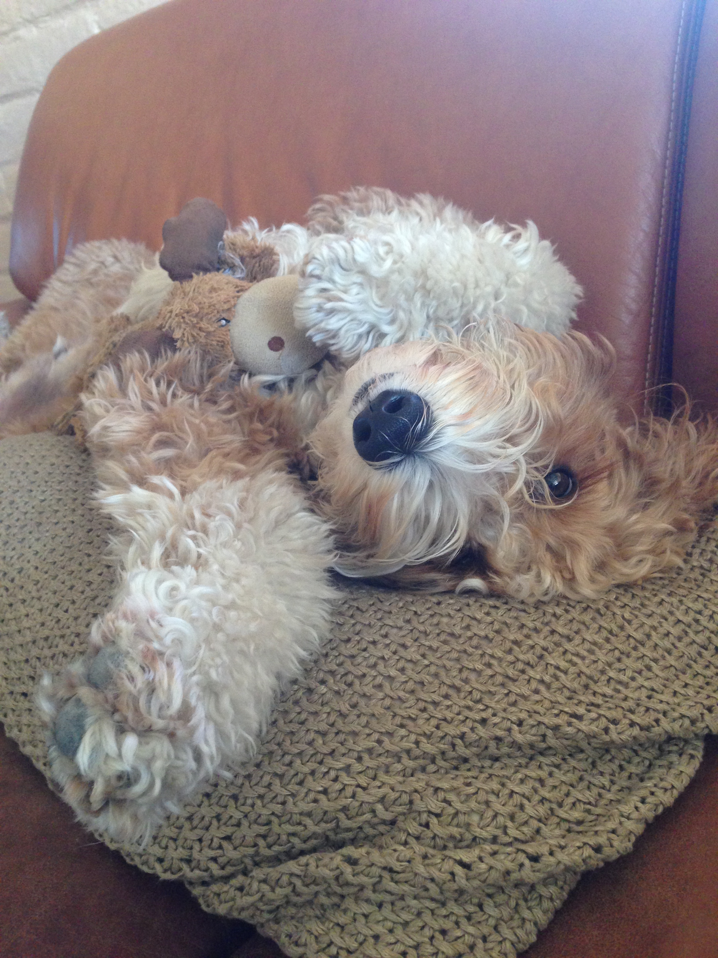 Bernie McSquare enjoys relaxing on the couch with his favorite plush toy Marvin Moose.